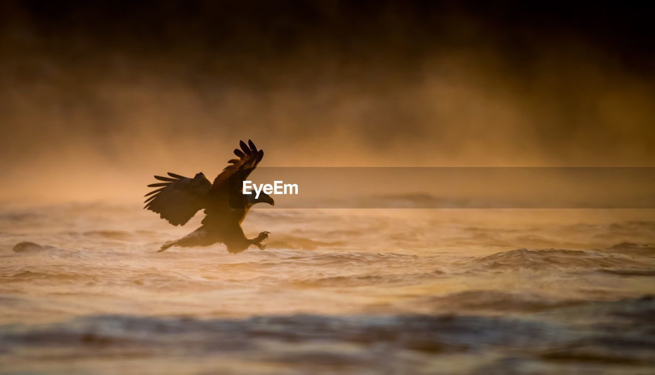 spread wings, animal, selective focus, animal themes, sunset, bird, no people, motion, vertebrate, one animal, land, flying, nature, animals in the wild, animal wildlife, beauty in nature, sky, beach, outdoors, day