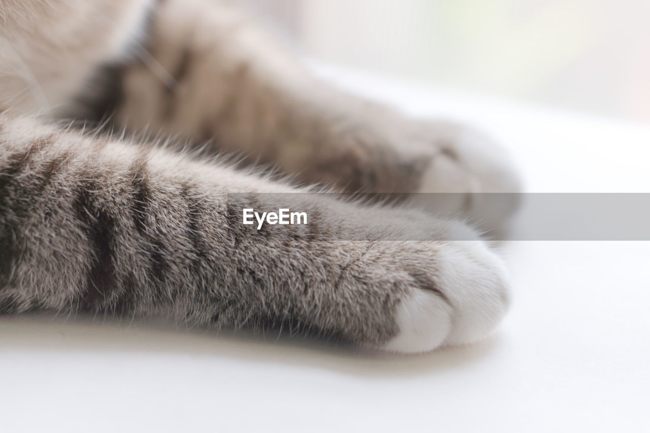 pets, domestic, mammal, animal, cat, domestic animals, animal themes, domestic cat, feline, paw, animal leg, close-up, animal body part, one animal, relaxation, indoors, vertebrate, no people, selective focus, lying down, whisker, napping
