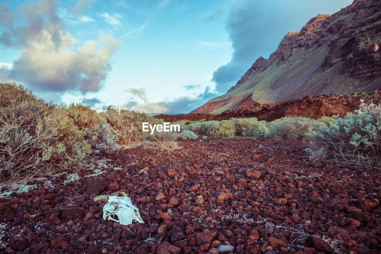 Skull On Rocks In Desert Against Sky