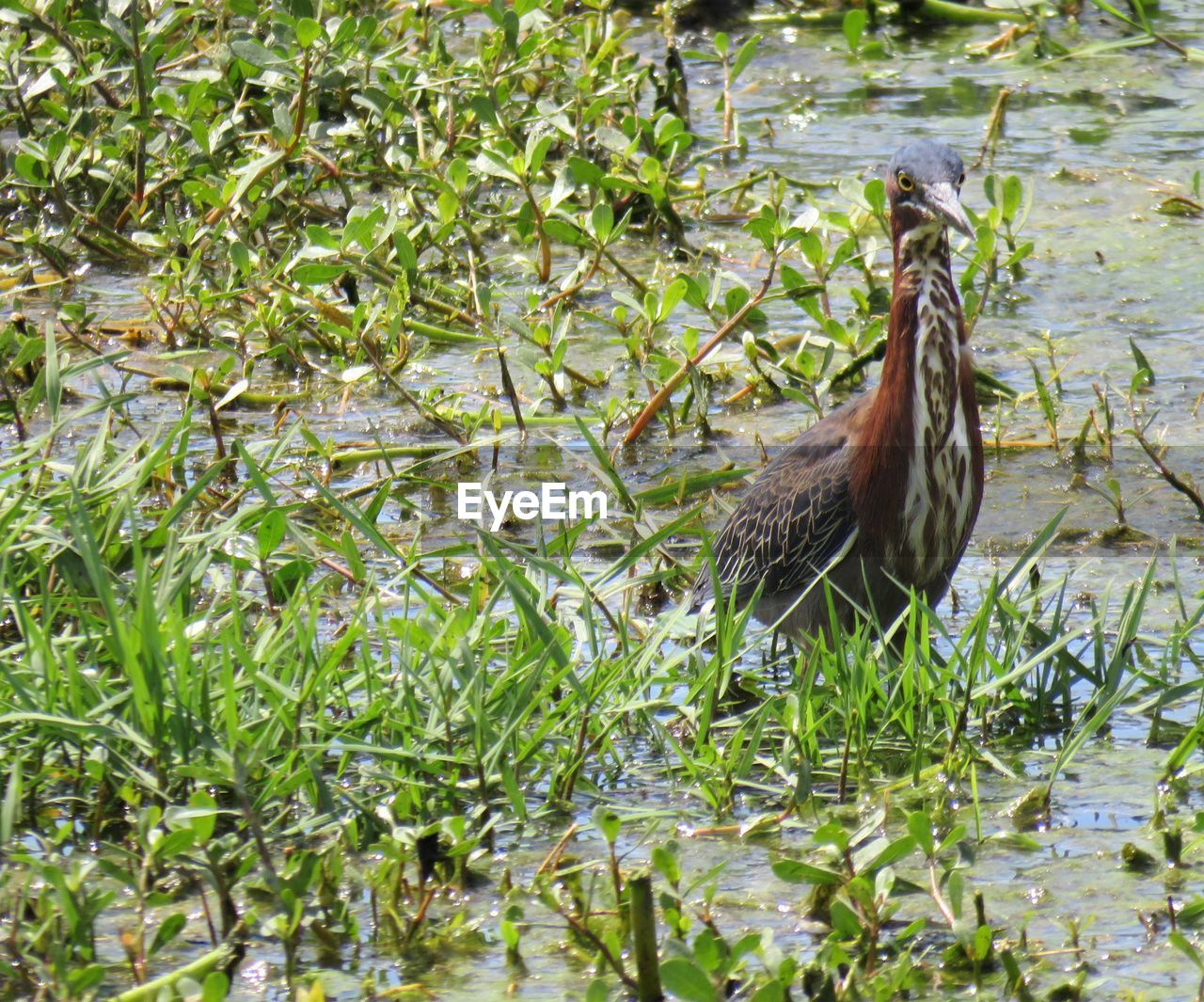 animal themes, animals in the wild, one animal, plant, bird, nature, green color, animal wildlife, day, no people, growth, outdoors, leaf, beauty in nature, grass, water