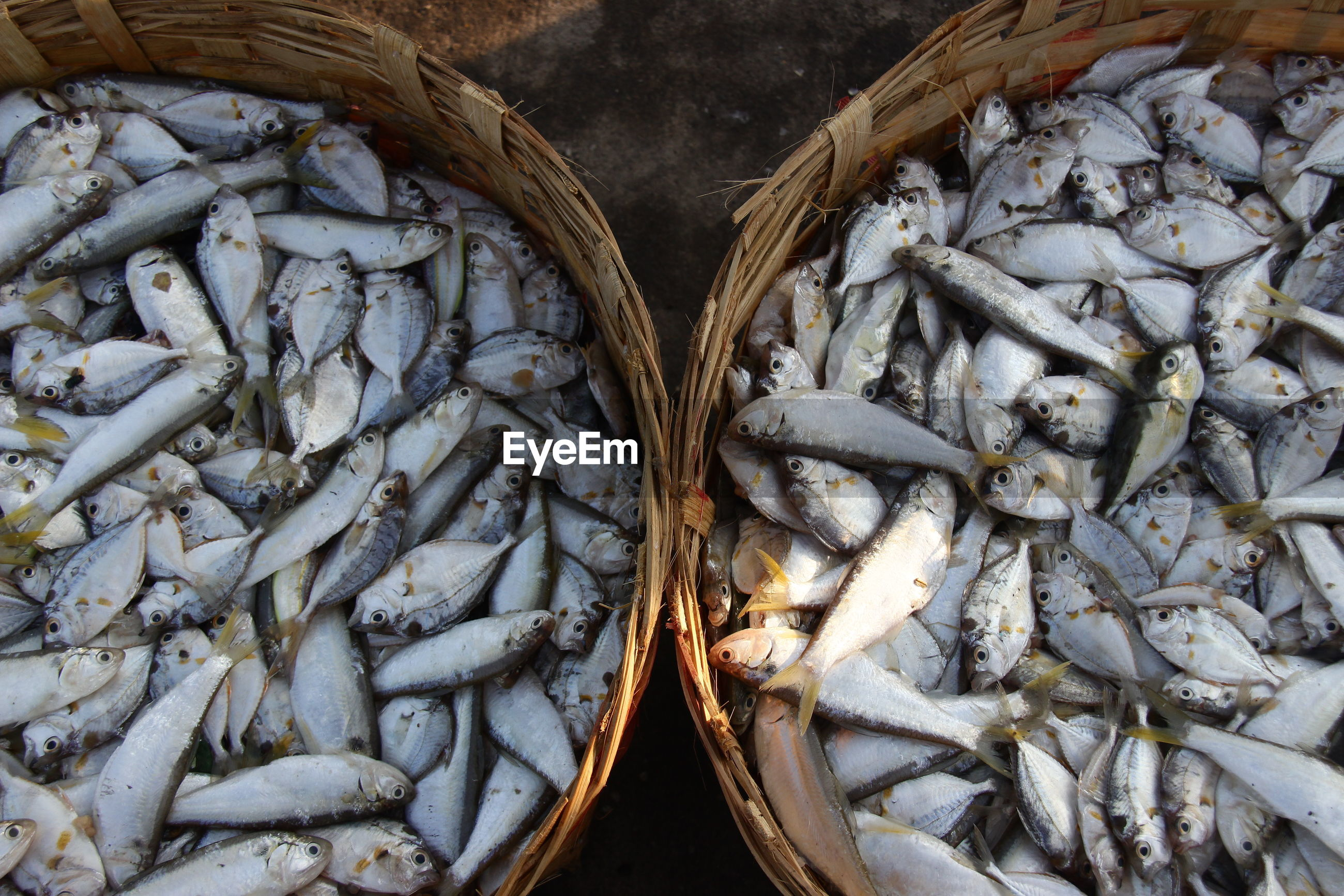 High angle view of fish for sale in market. fish for background
