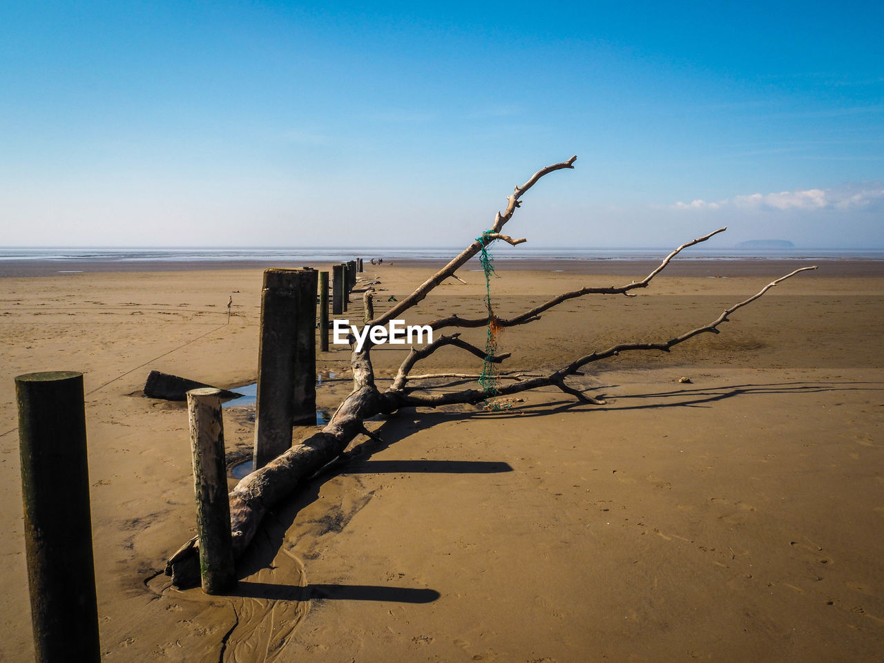 sand, nature, sea, beach, no people, tranquility, water, scenics, outdoors, day, sky, tranquil scene, dead plant, horizon over water, beauty in nature, dead tree