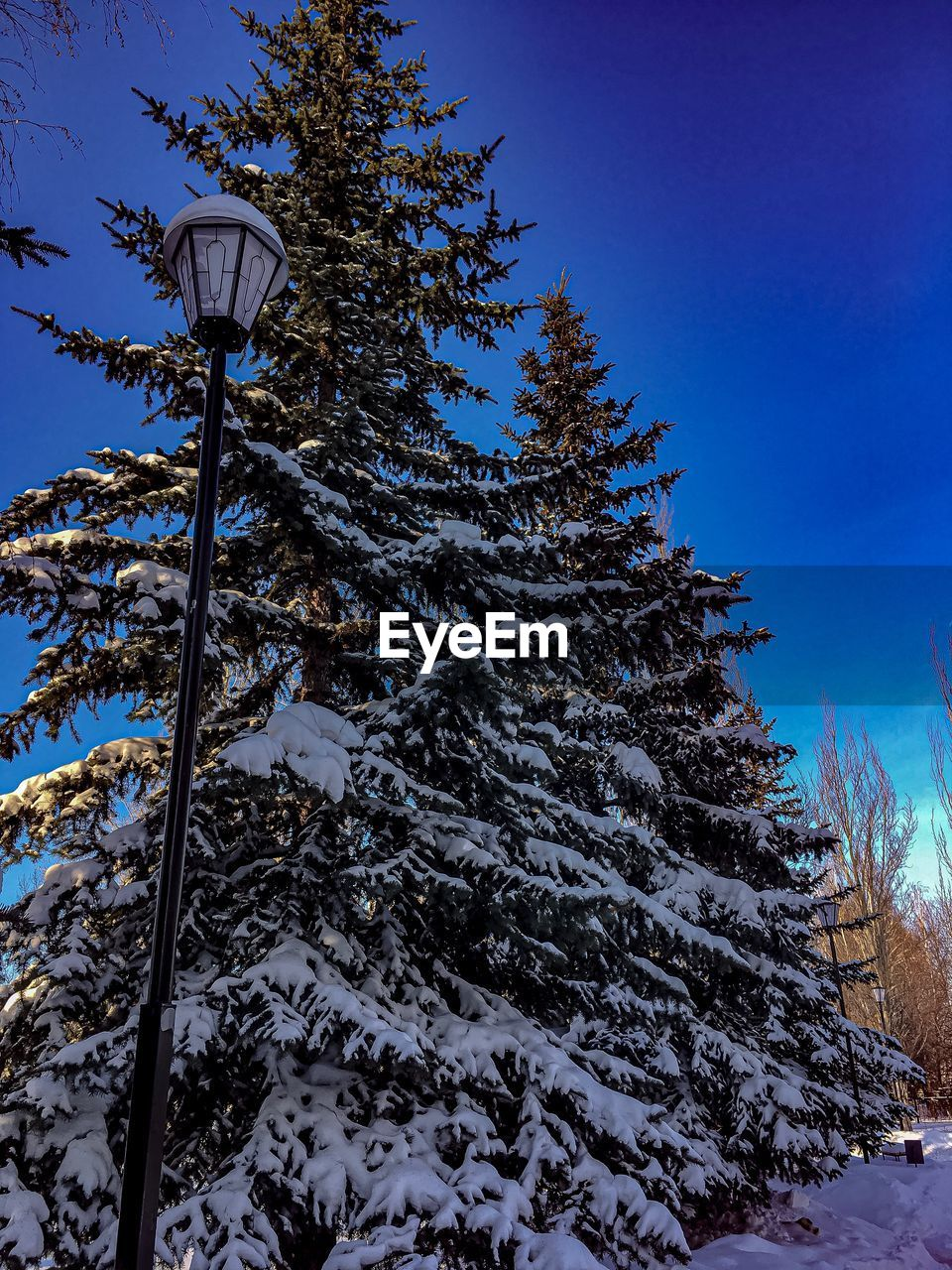snow, winter, cold temperature, tree, plant, sky, nature, low angle view, scenics - nature, no people, covering, tranquility, beauty in nature, land, tranquil scene, day, frozen, mountain, blue, outdoors, pine tree, coniferous tree, snowcapped mountain