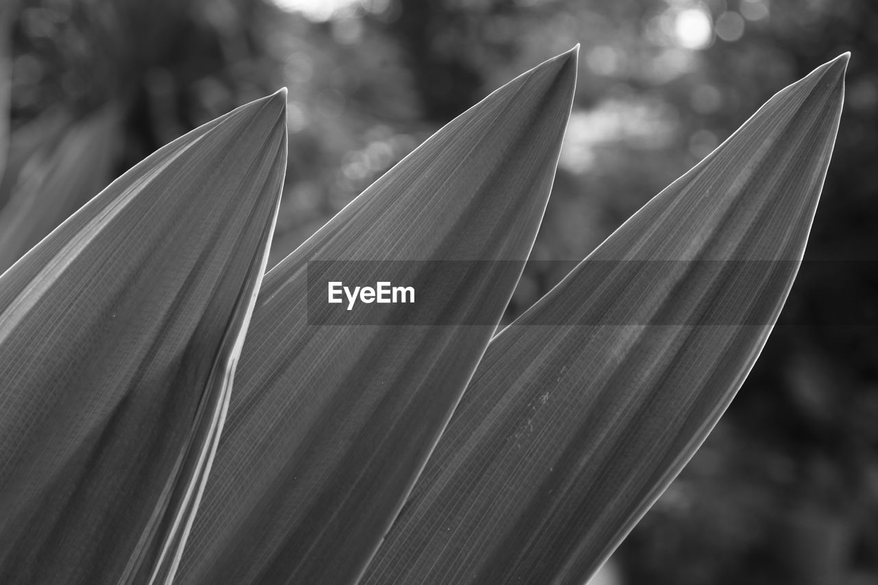 focus on foreground, close-up, no people, growth, day, nature, plant, outdoors, fragility, vulnerability, freshness, beauty in nature, pattern, leaf, sunlight, plant part, tree, natural pattern, art and craft, tranquility