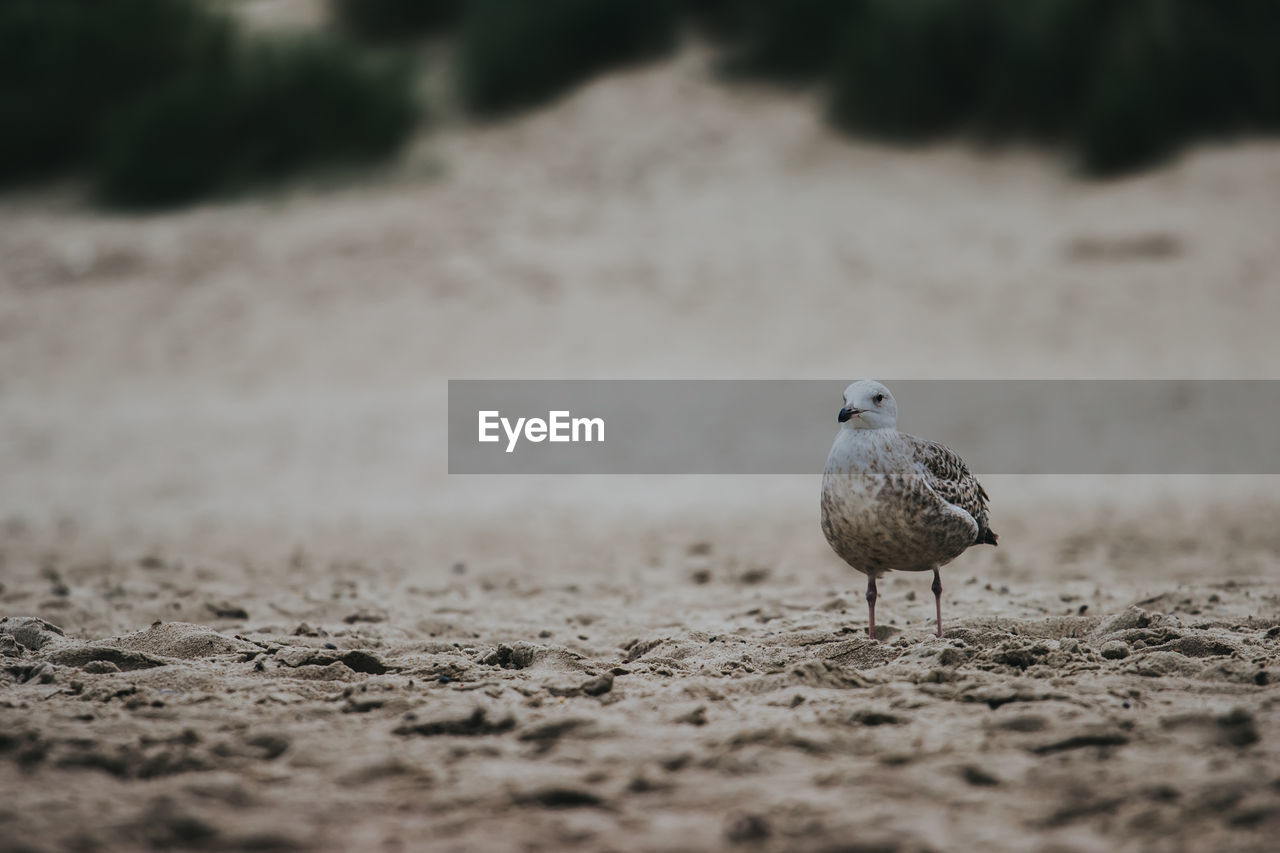 VIEW OF SEAGULL PERCHING ON A LAND