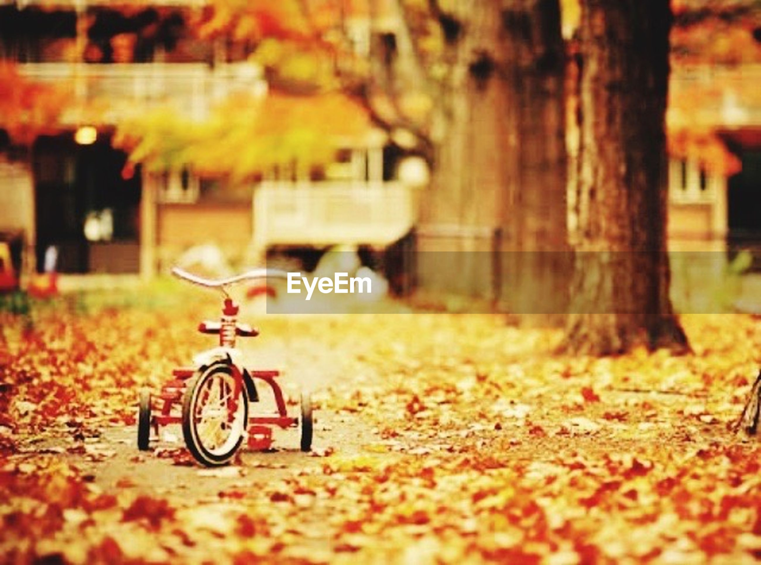 bicycle, transportation, mode of transport, land vehicle, autumn, selective focus, yellow, tree, focus on foreground, outdoors, street, day, stationary, surface level, change, season, nature, no people, field, built structure