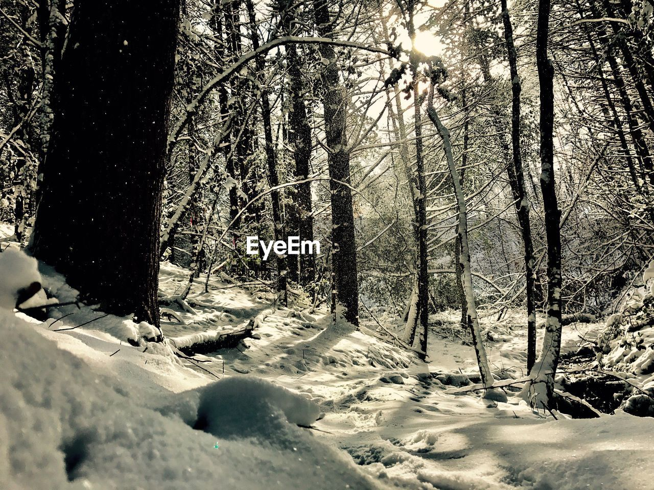 snow, winter, cold temperature, nature, tree, forest, no people, sunlight, day, landscape, beauty in nature, outdoors
