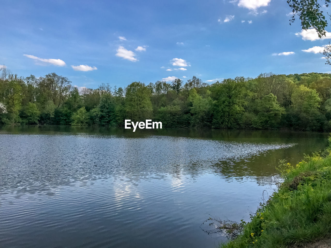 tree, water, plant, scenics - nature, tranquility, lake, beauty in nature, sky, tranquil scene, reflection, cloud - sky, no people, day, non-urban scene, growth, nature, waterfront, green color, idyllic