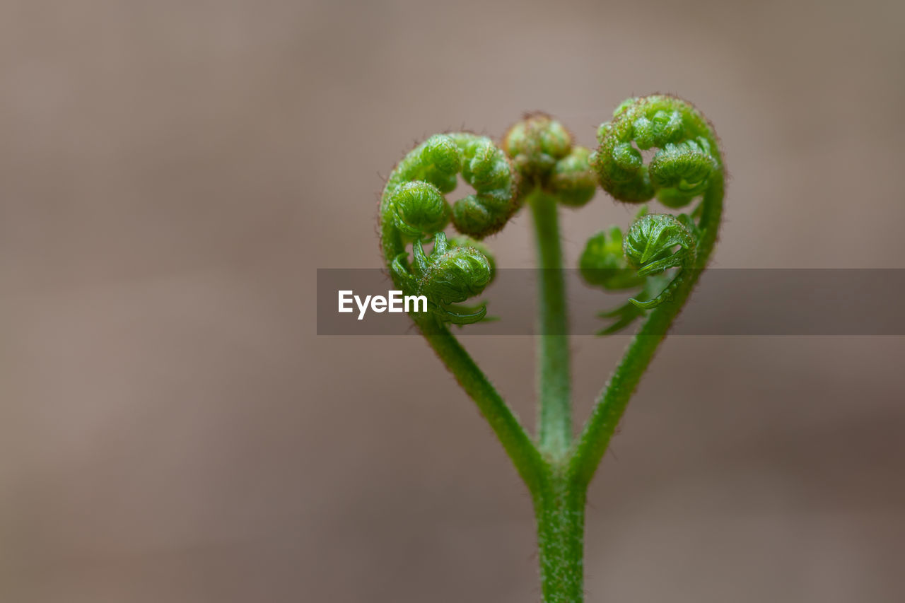 green color, growth, close-up, plant, focus on foreground, no people, freshness, beginnings, beauty in nature, fragility, tendril, vulnerability, nature, new life, plant stem, fern, day, bud, selective focus, outdoors