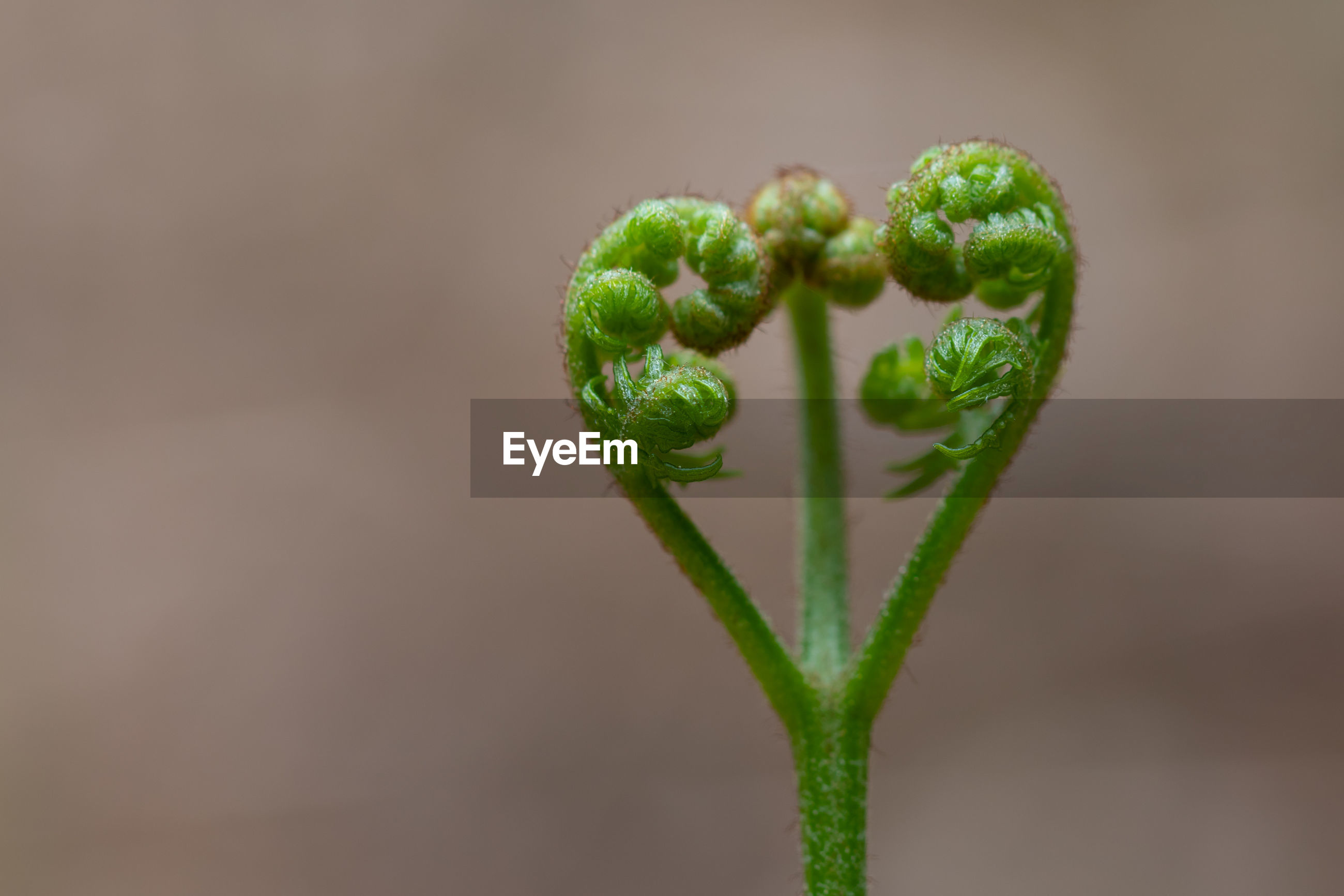 CLOSE-UP OF GREEN BUD