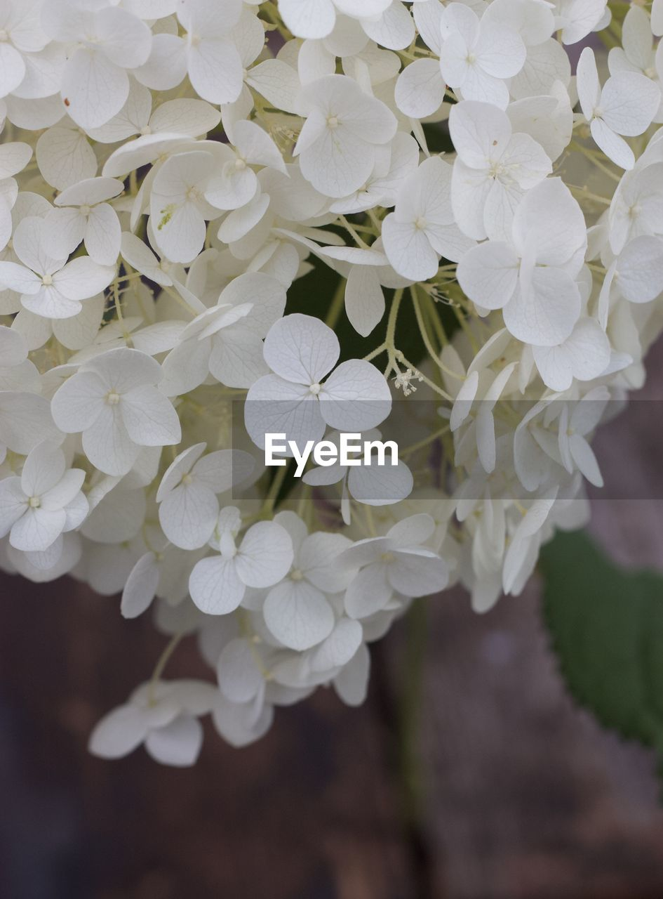 flowering plant, flower, plant, vulnerability, fragility, beauty in nature, freshness, petal, growth, inflorescence, close-up, flower head, white color, nature, day, focus on foreground, outdoors, no people, white, selective focus, bunch of flowers, lilac, flower arrangement