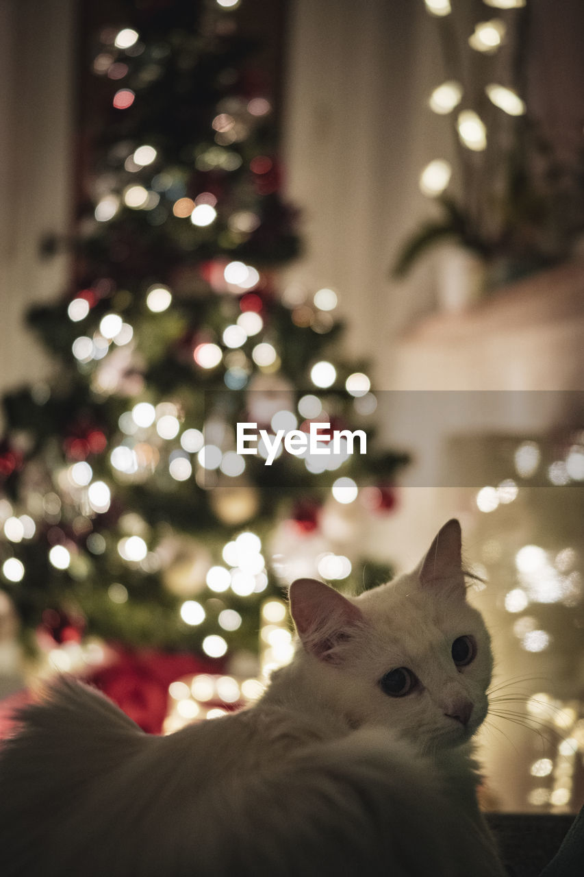 HIGH ANGLE VIEW OF A CAT WITH CHRISTMAS TREE AT HOME