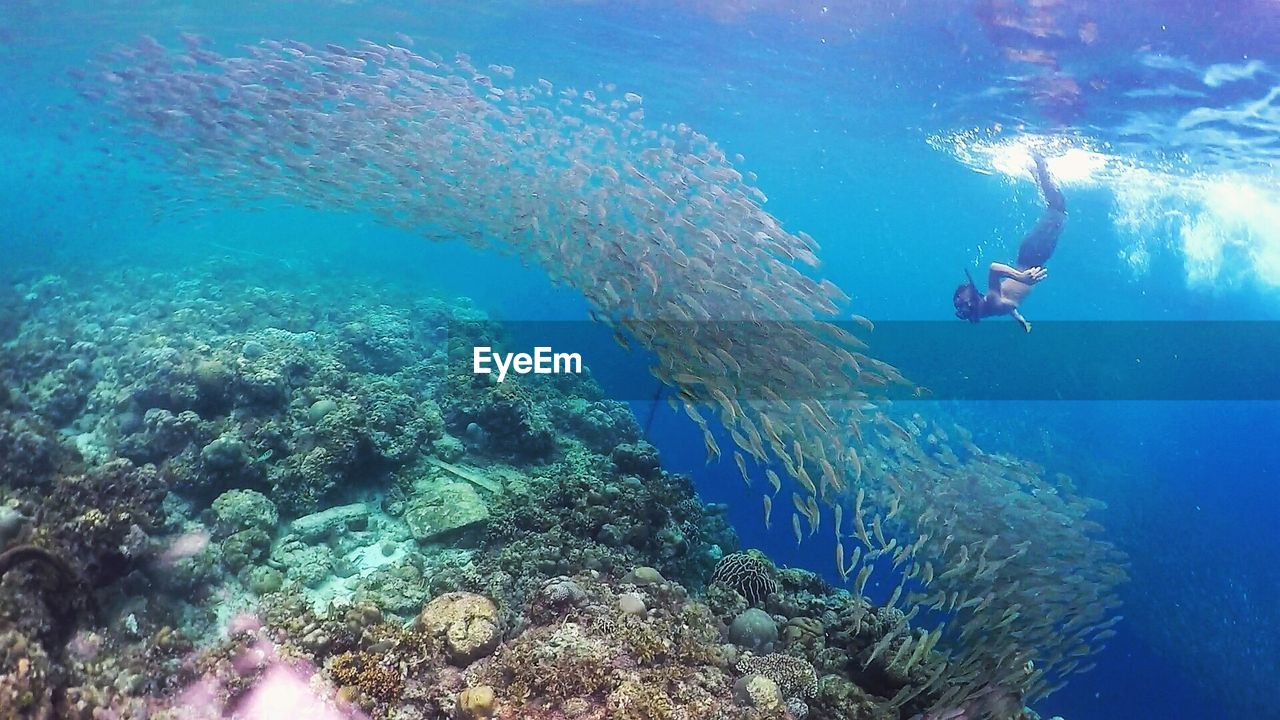 underwater, undersea, adventure, real people, exploration, swimming, sea, water, leisure activity, blue, one person, scuba diving, nature, sea life, men, scuba diver, animals in the wild, day, large group of animals, beauty in nature, people