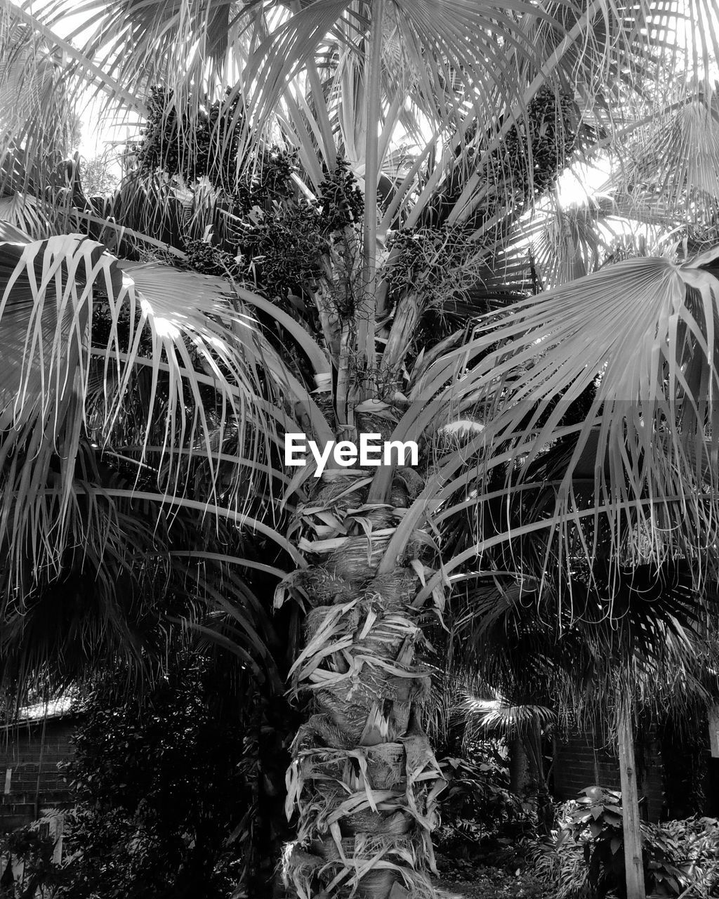growth, plant, day, tropical climate, palm tree, nature, no people, beauty in nature, tree, close-up, outdoors, tranquility, land, leaf, sunlight, crop, palm leaf, agriculture