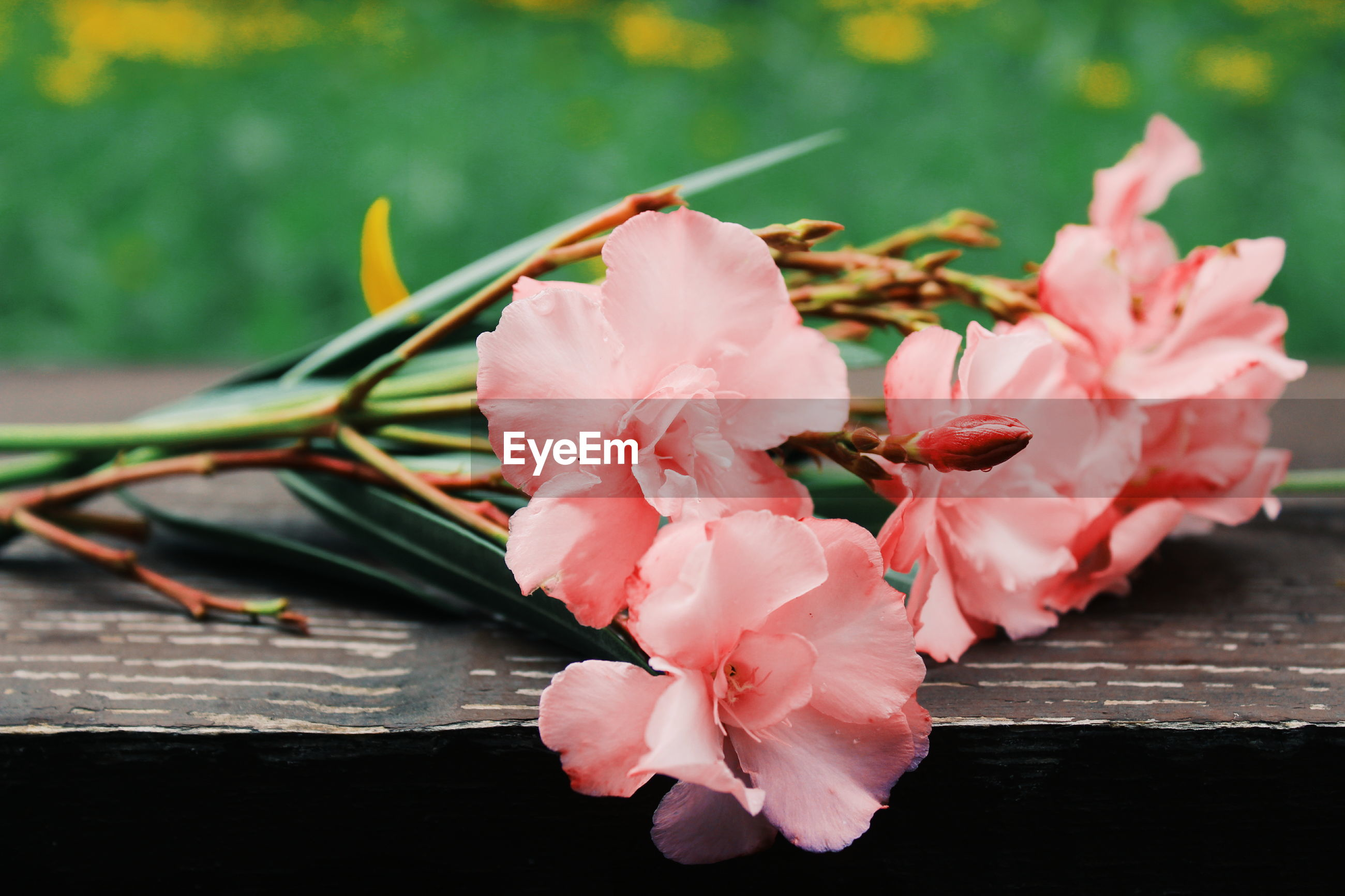 CLOSE-UP OF PINK FLOWERING PLANT WITH WOOD