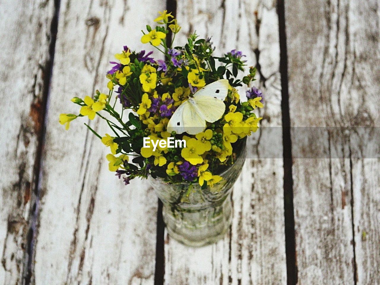 plant, flower, wood - material, flowering plant, fragility, vulnerability, close-up, freshness, beauty in nature, yellow, nature, no people, day, growth, outdoors, focus on foreground, flower head, inflorescence, petal, white color, bark, butterfly - insect, lichen