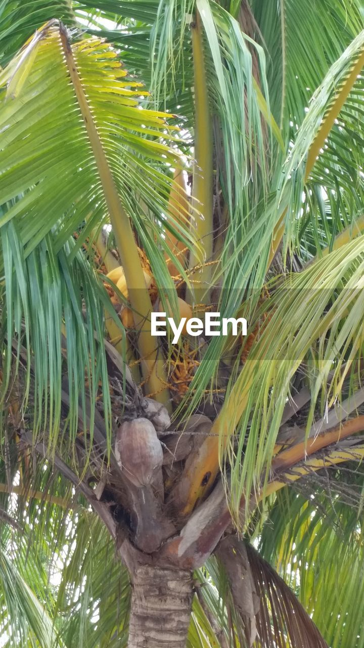 growth, nature, green color, leaf, no people, plant, food, freshness, palm tree, close-up, tree, beauty in nature, outdoors, day