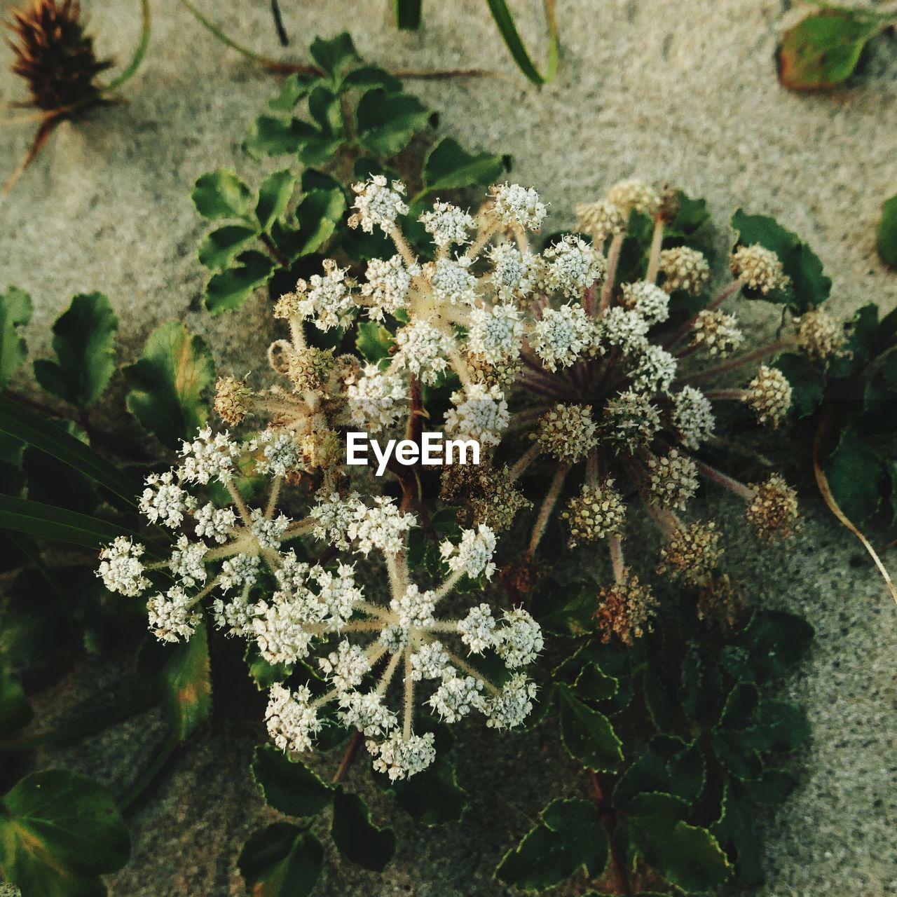plant, close-up, growth, nature, no people, beauty in nature, day, flower, green color, flowering plant, outdoors, focus on foreground, leaf, selective focus, fragility, cold temperature, high angle view, vulnerability, plant part, winter