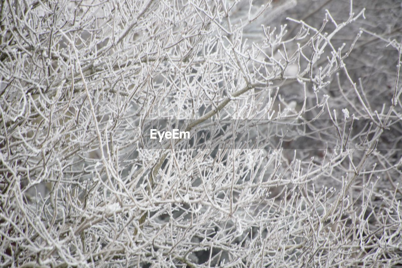nature, close-up, no people, backgrounds, cold temperature, plant, winter, outdoors, fragility, day, snow, snowflake, freshness