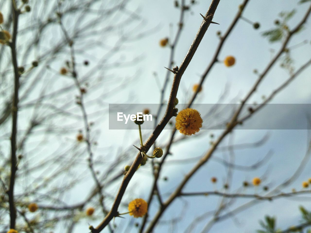 plant, tree, growth, branch, flower, beauty in nature, freshness, flowering plant, selective focus, nature, low angle view, focus on foreground, fragility, day, no people, vulnerability, sky, close-up, outdoors, springtime, pollen, flower head