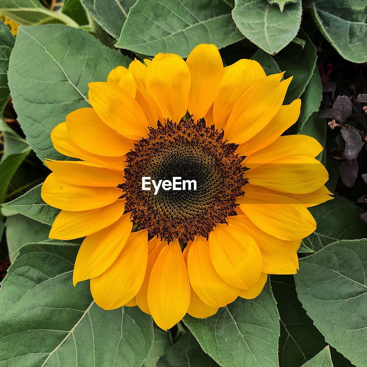 flower, yellow, petal, fragility, leaf, flower head, beauty in nature, nature, plant, growth, freshness, sunflower, outdoors, pollen, day, no people, close-up, green color, blooming