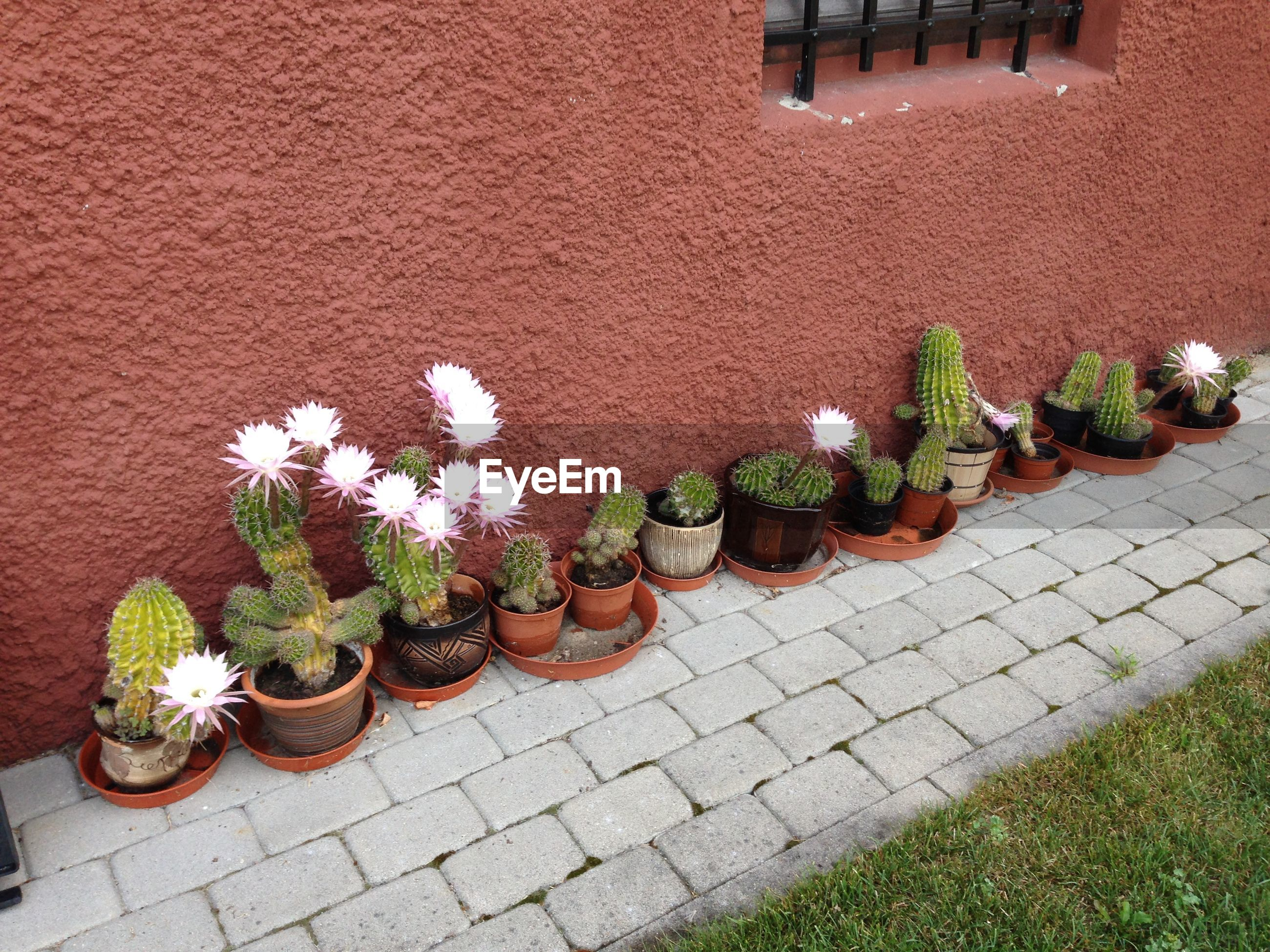 HIGH ANGLE VIEW OF POTTED PLANTS ON WALL