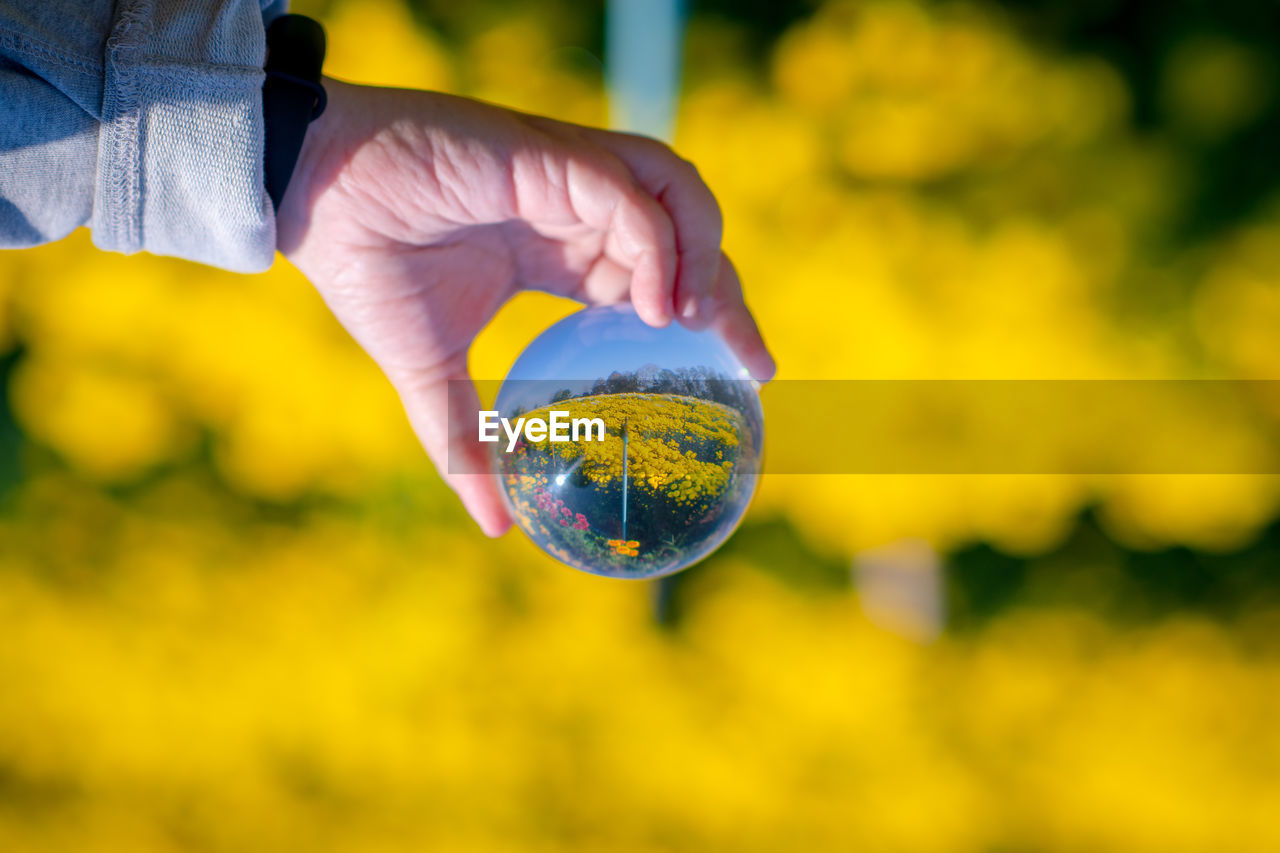 Close-up of child hand holding crystal ball against yellow flowering plants at farm