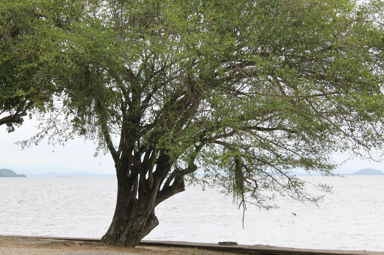 tree, nature, sea, water, tranquility, outdoors, branch, scenics, beauty in nature, day, sand, beach, no people