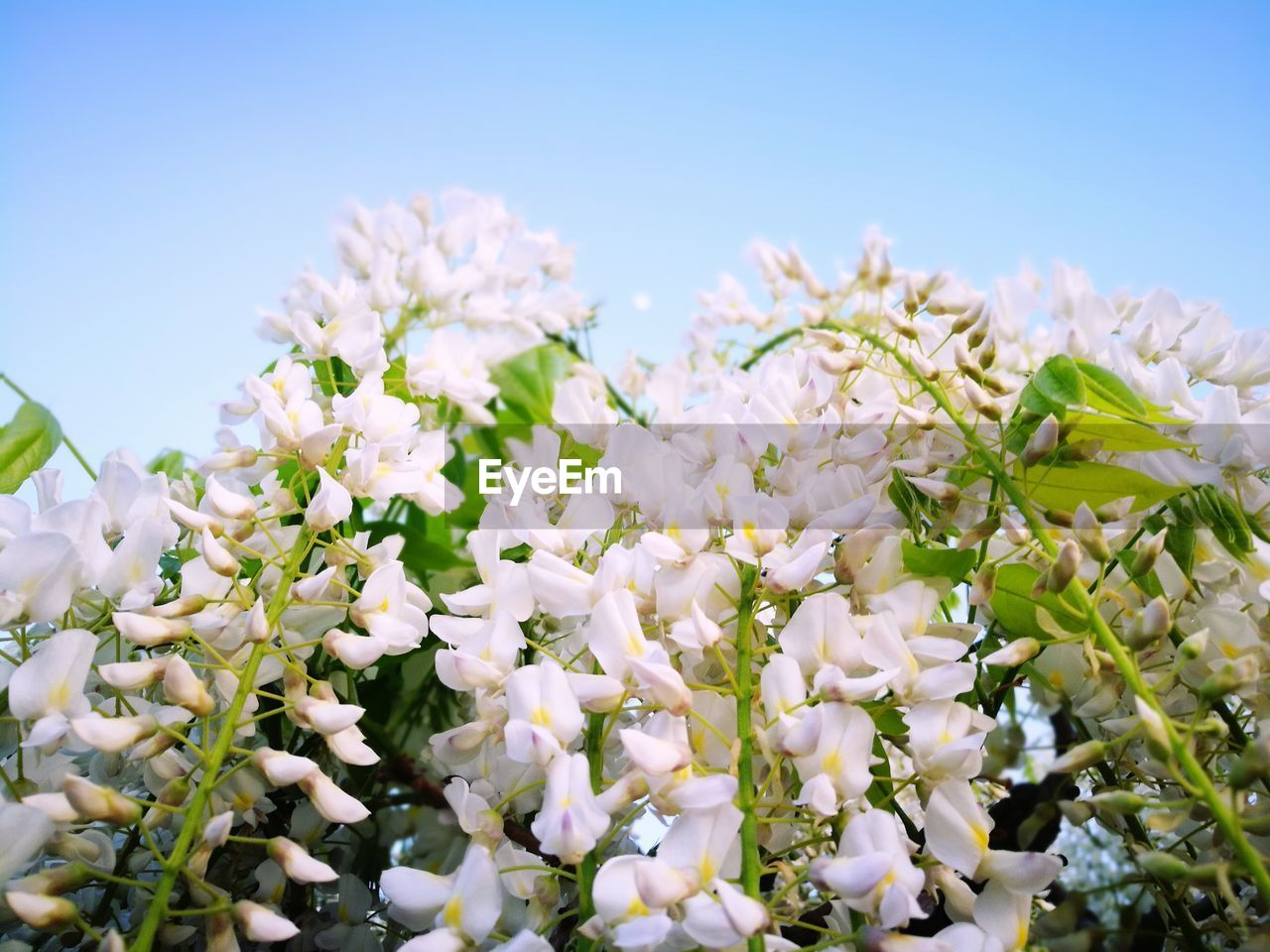 flower, fragility, white color, beauty in nature, nature, freshness, blossom, botany, growth, petal, springtime, no people, day, close-up, outdoors, flower head, blooming