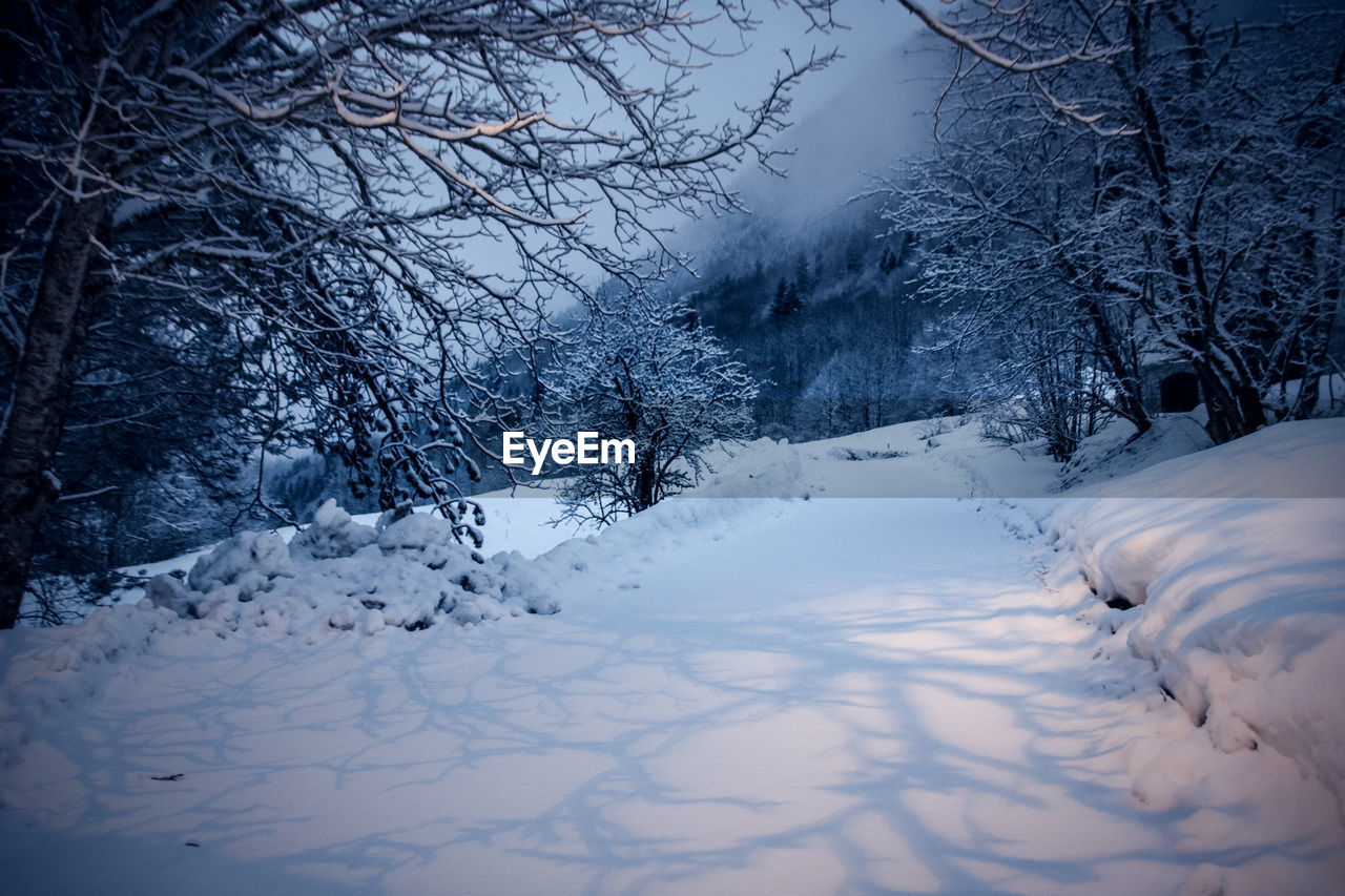 winter, snow, cold temperature, weather, nature, tranquility, tranquil scene, bare tree, outdoors, no people, beauty in nature, tree, sky, scenics, day