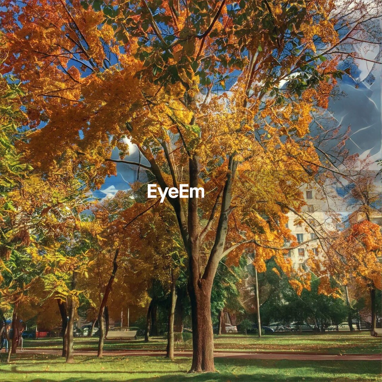 autumn, tree, leaf, change, nature, beauty in nature, scenics, branch, tranquility, tranquil scene, park - man made space, maple tree, outdoors, tree trunk, no people, landscape, day, bare tree, beauty, grass, maple, sky