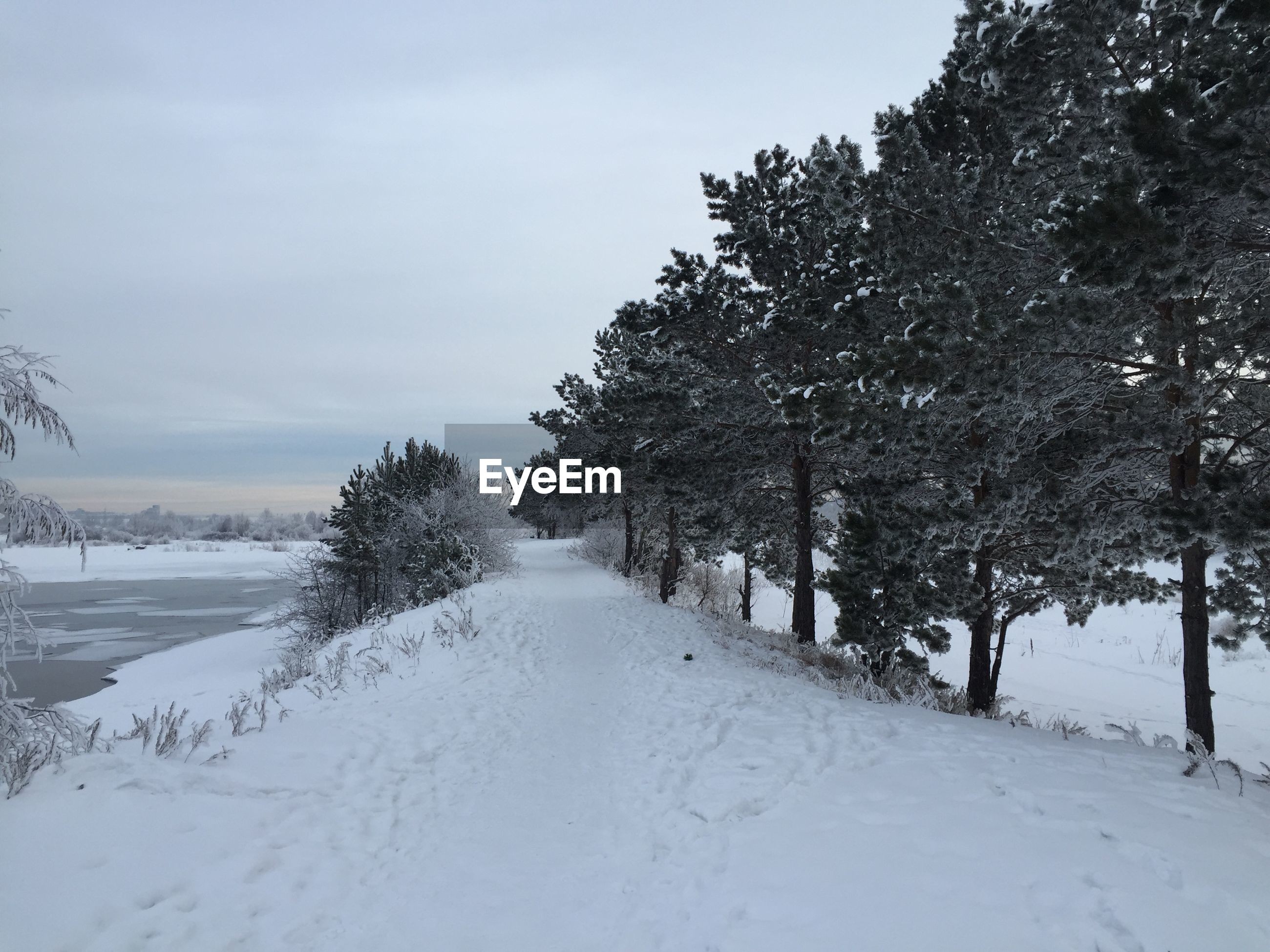 SNOW COVERED TREES BY ROAD AGAINST SKY