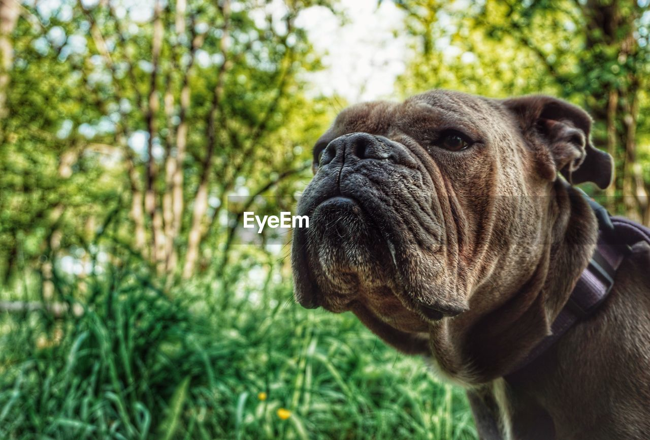 one animal, animal themes, mammal, dog, canine, animal, domestic, pets, domestic animals, vertebrate, close-up, focus on foreground, nature, no people, day, looking, looking away, animal body part, plant, animal head