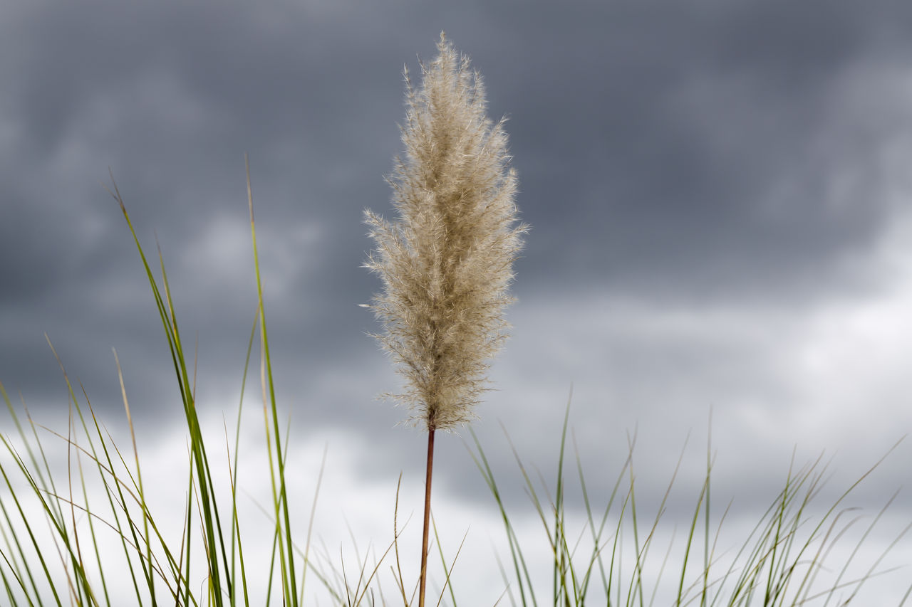 nature, growth, plant, beauty in nature, grass, growing, field, tranquility, no people, day, outdoors, sky, freshness, close-up