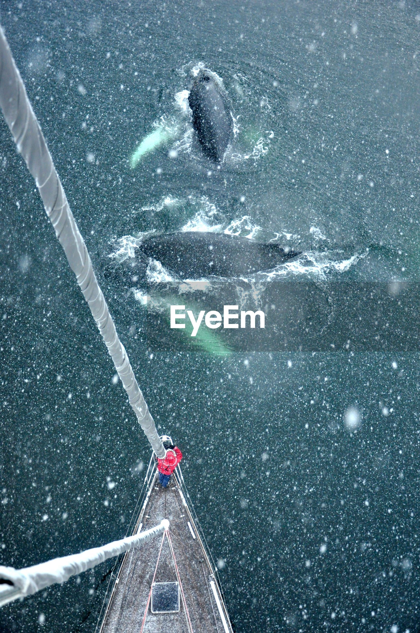 High angle view of whales by sailboat on sea during winter