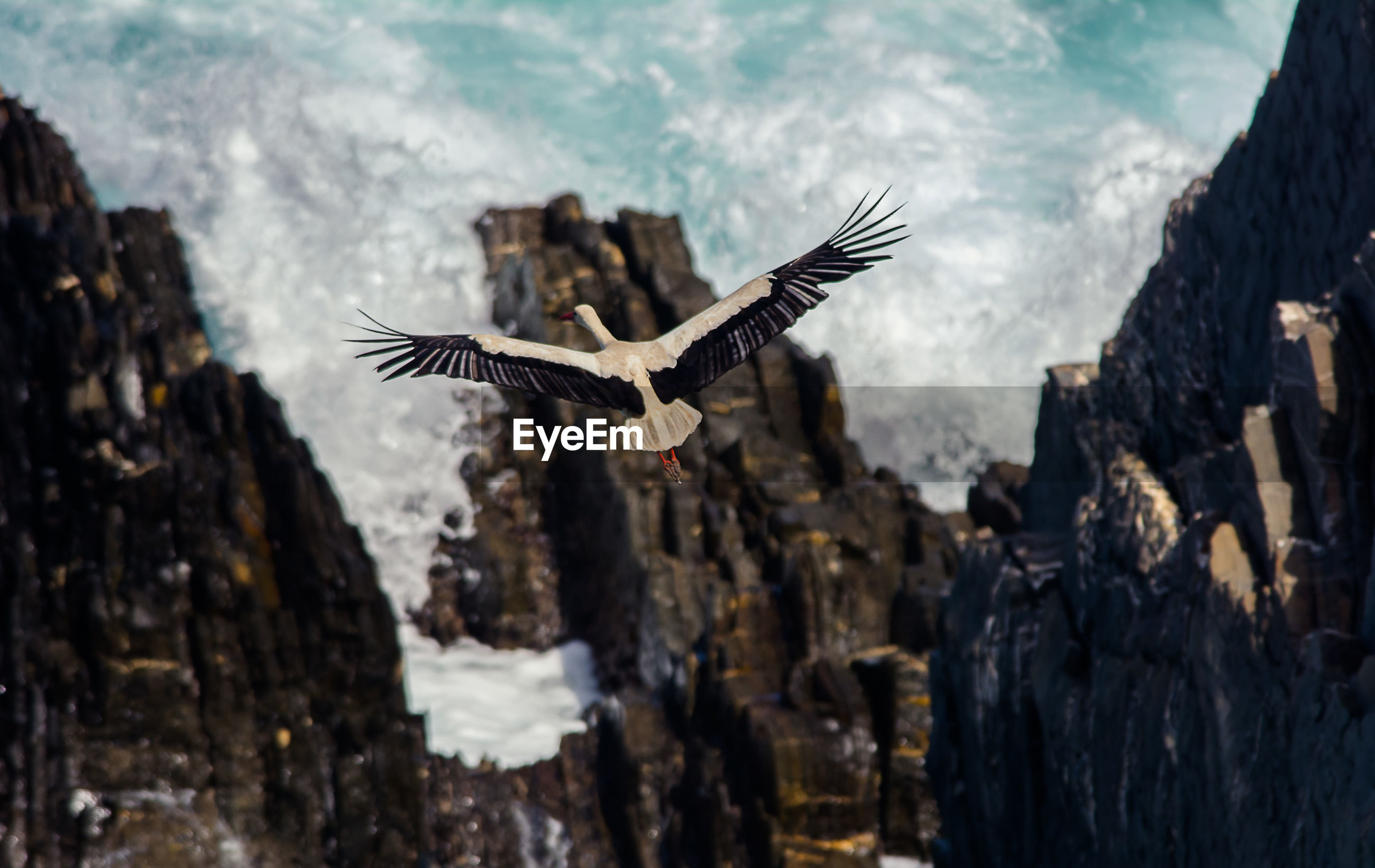 Low angle view of stork flying over rocks