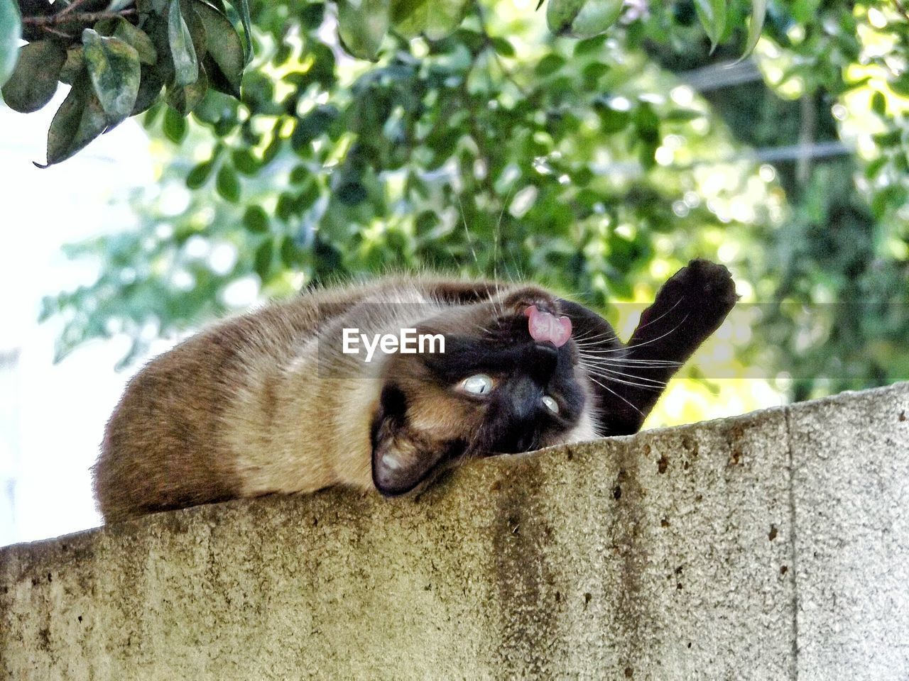 animal themes, mammal, animal, one animal, vertebrate, domestic, domestic animals, pets, cat, relaxation, domestic cat, no people, feline, day, focus on foreground, tree, animal wildlife, animals in the wild, nature, lying down, whisker, animal head