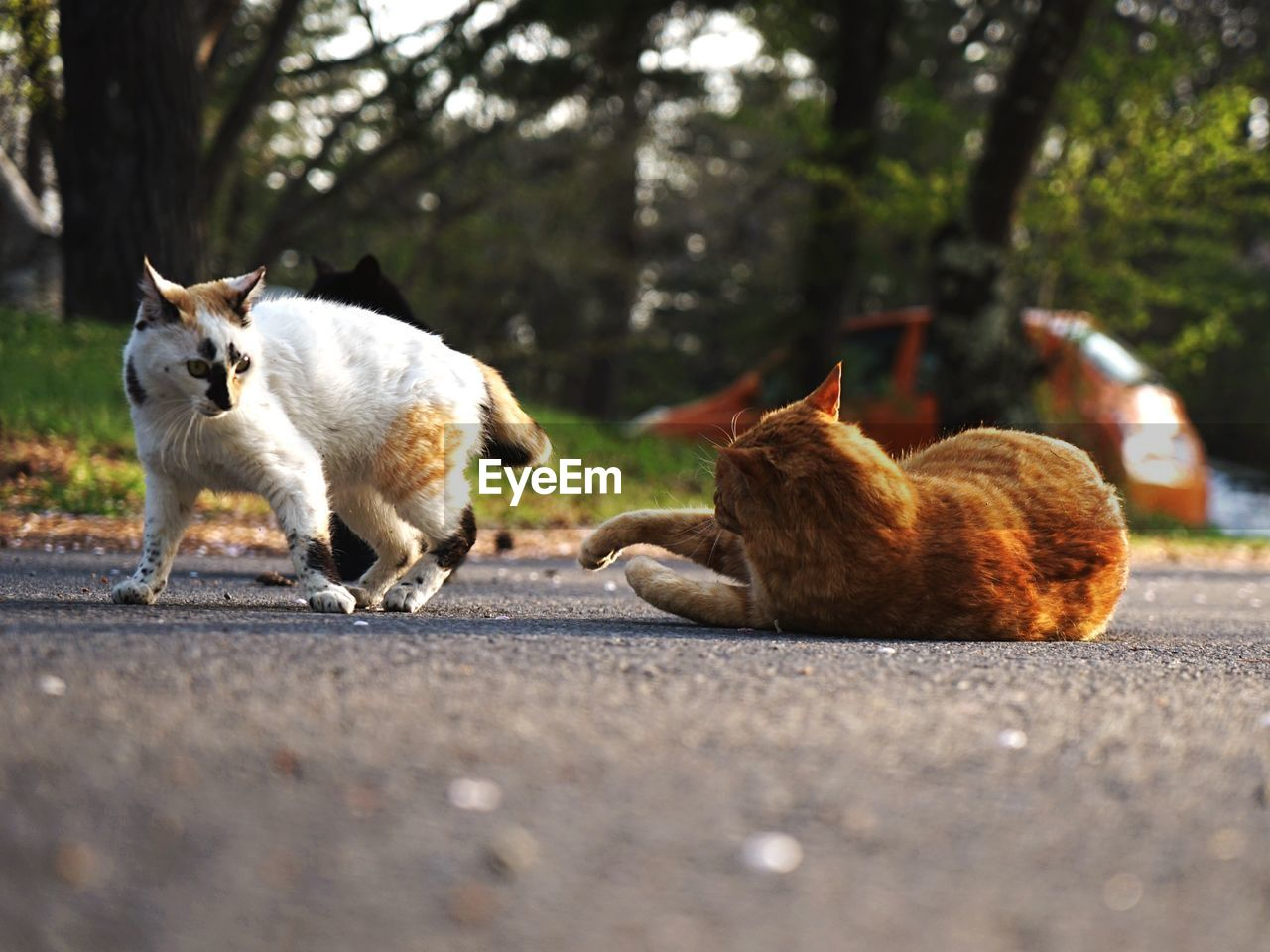 mammal, animal themes, domestic animals, pets, domestic, animal, road, group of animals, vertebrate, two animals, canine, dog, tree, day, city, selective focus, plant, nature, transportation, no people, outdoors, surface level, ginger cat