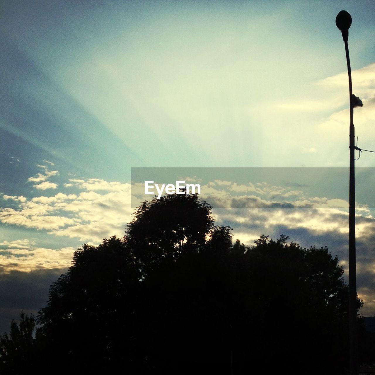View of sunbeams behind tree