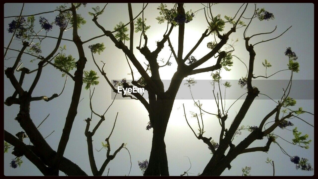 tree, branch, silhouette, nature, outdoors, no people, beauty in nature, tranquility, growth, day, low angle view, sky, animal themes, close-up