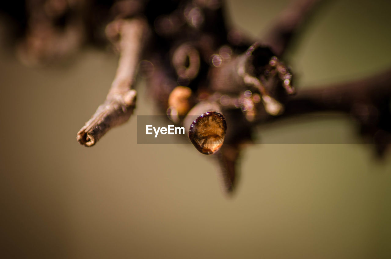 close-up, selective focus, no people, plant, focus on foreground, beauty in nature, nature, flower, fragility, vulnerability, growth, day, brown, outdoors, freshness, flowering plant, tranquility, food and drink, twig