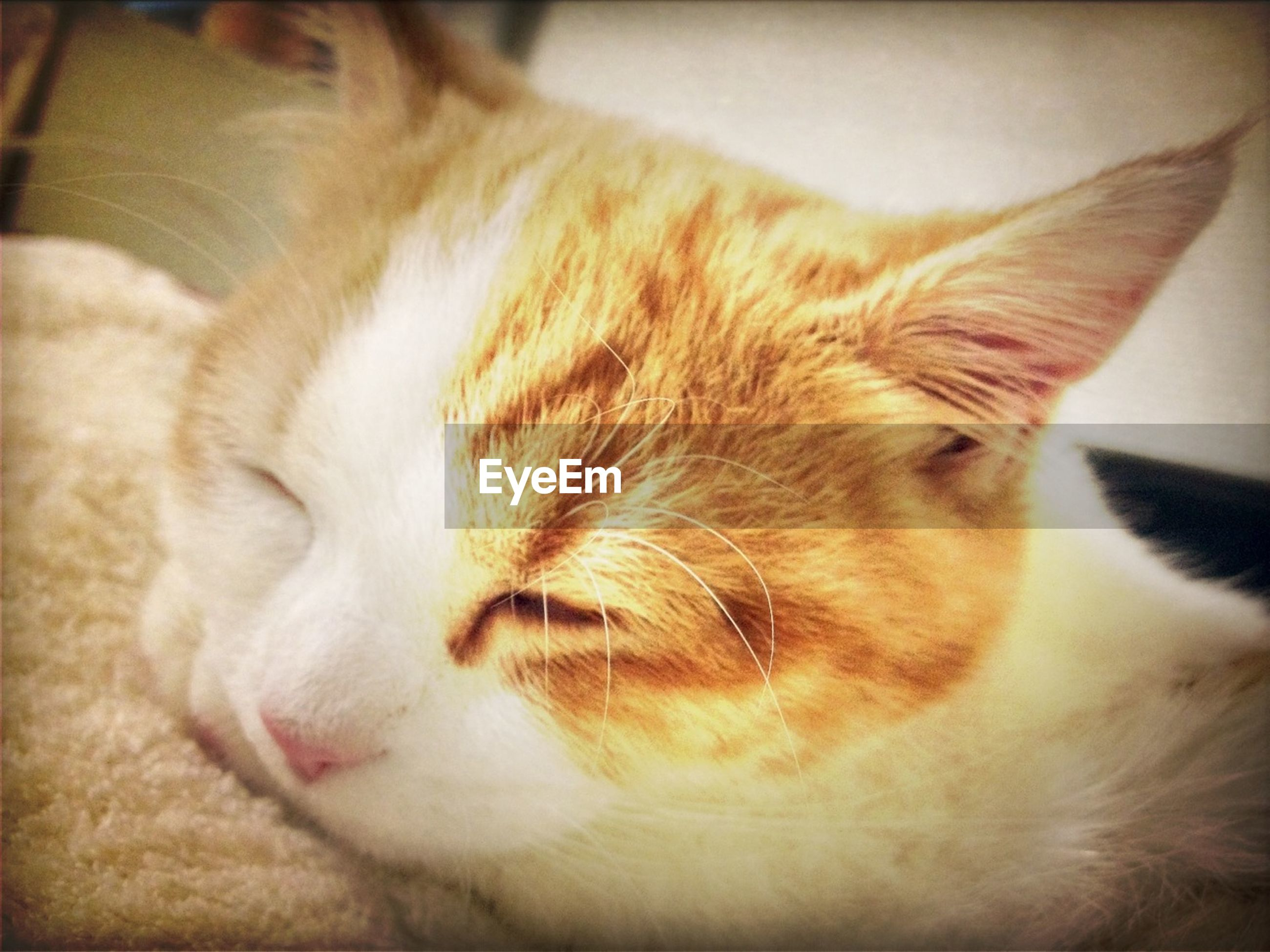 pets, domestic animals, indoors, domestic cat, mammal, one animal, cat, animal themes, relaxation, feline, whisker, resting, close-up, lying down, sleeping, eyes closed, animal head, home interior, bed, home
