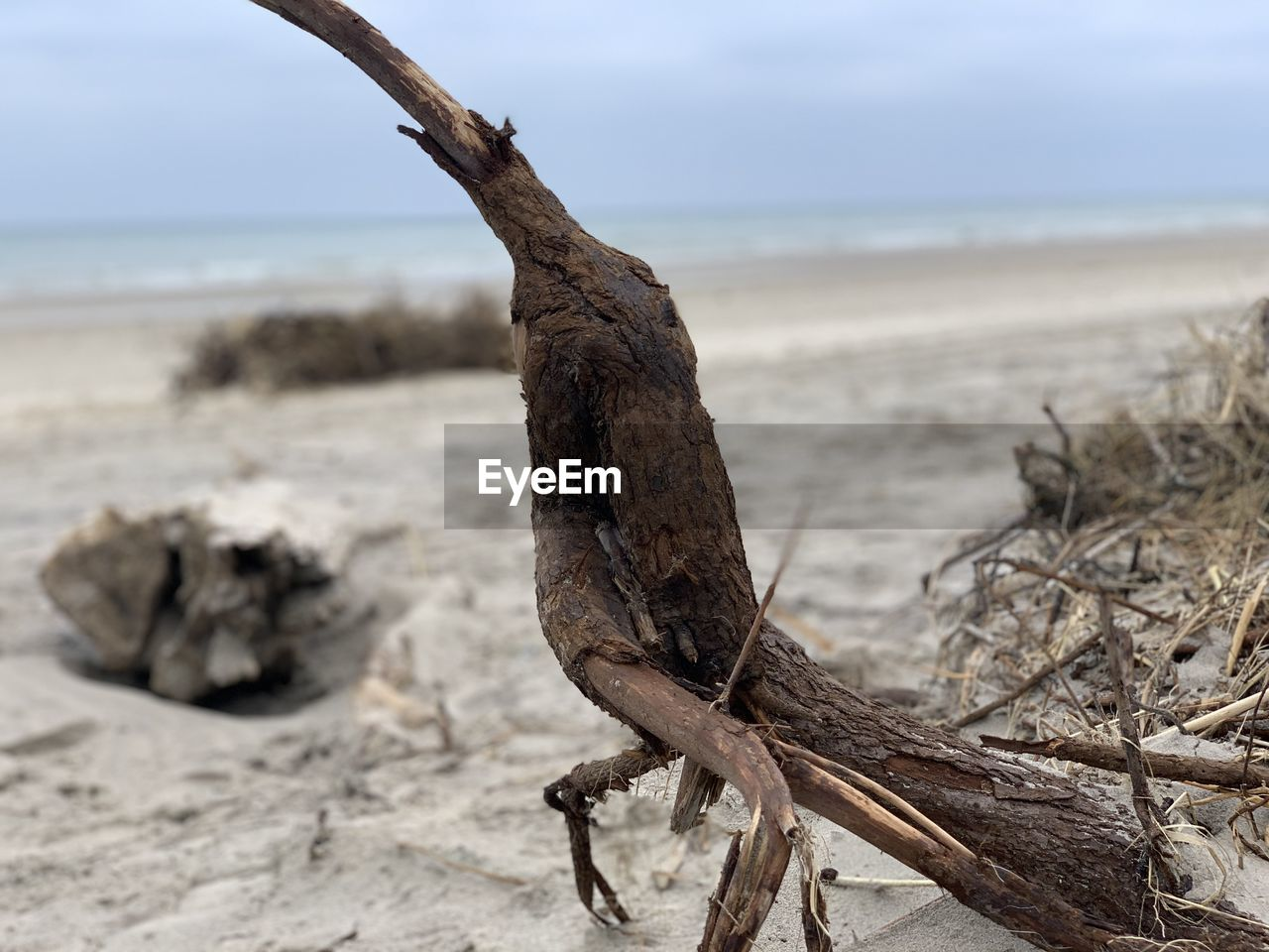 Close-up of driftwood on beach
