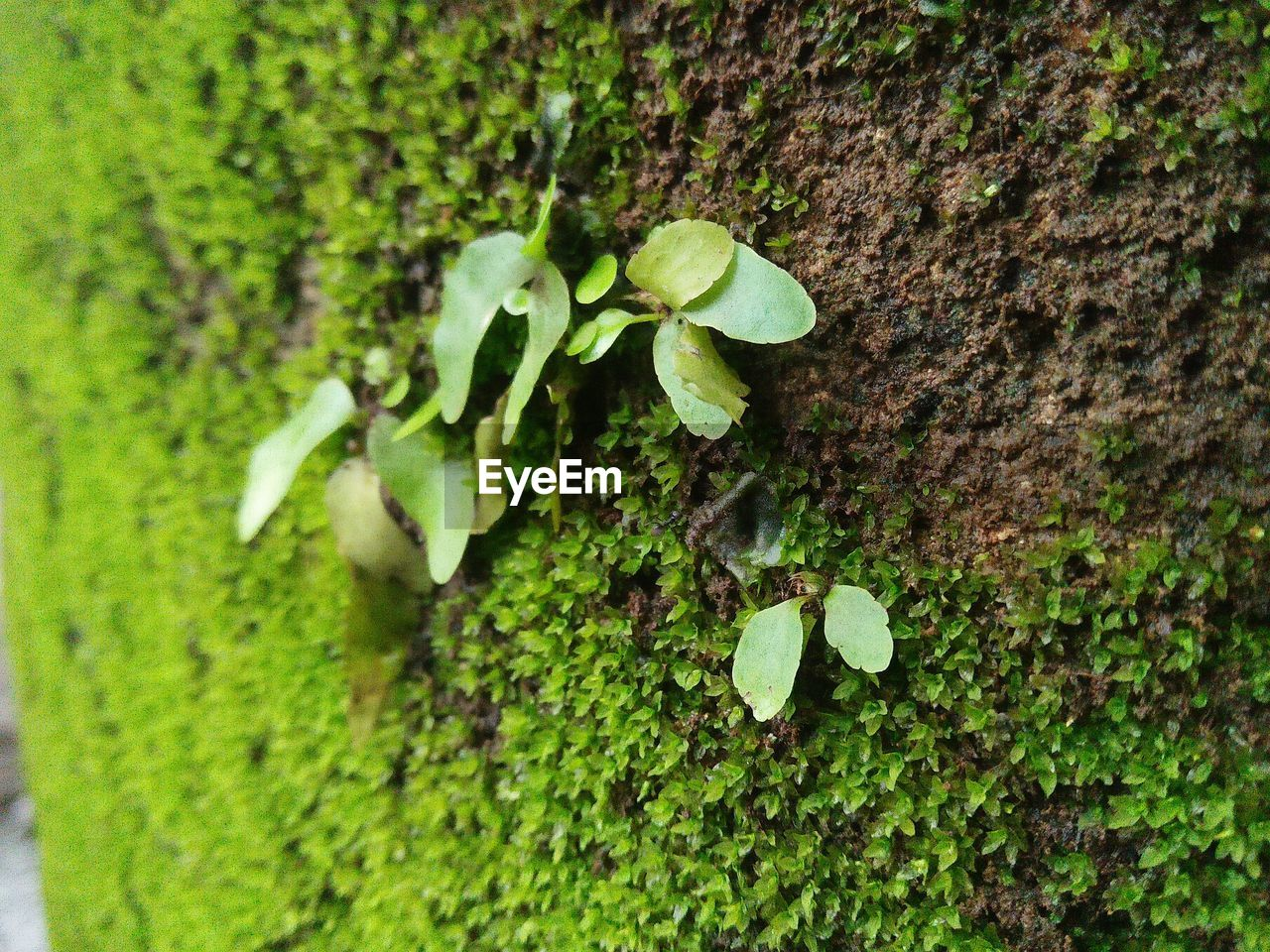 green color, growth, plant, plant part, leaf, close-up, beauty in nature, nature, no people, day, selective focus, freshness, outdoors, high angle view, vulnerability, fragility, tranquility, trunk, tree trunk, beginnings