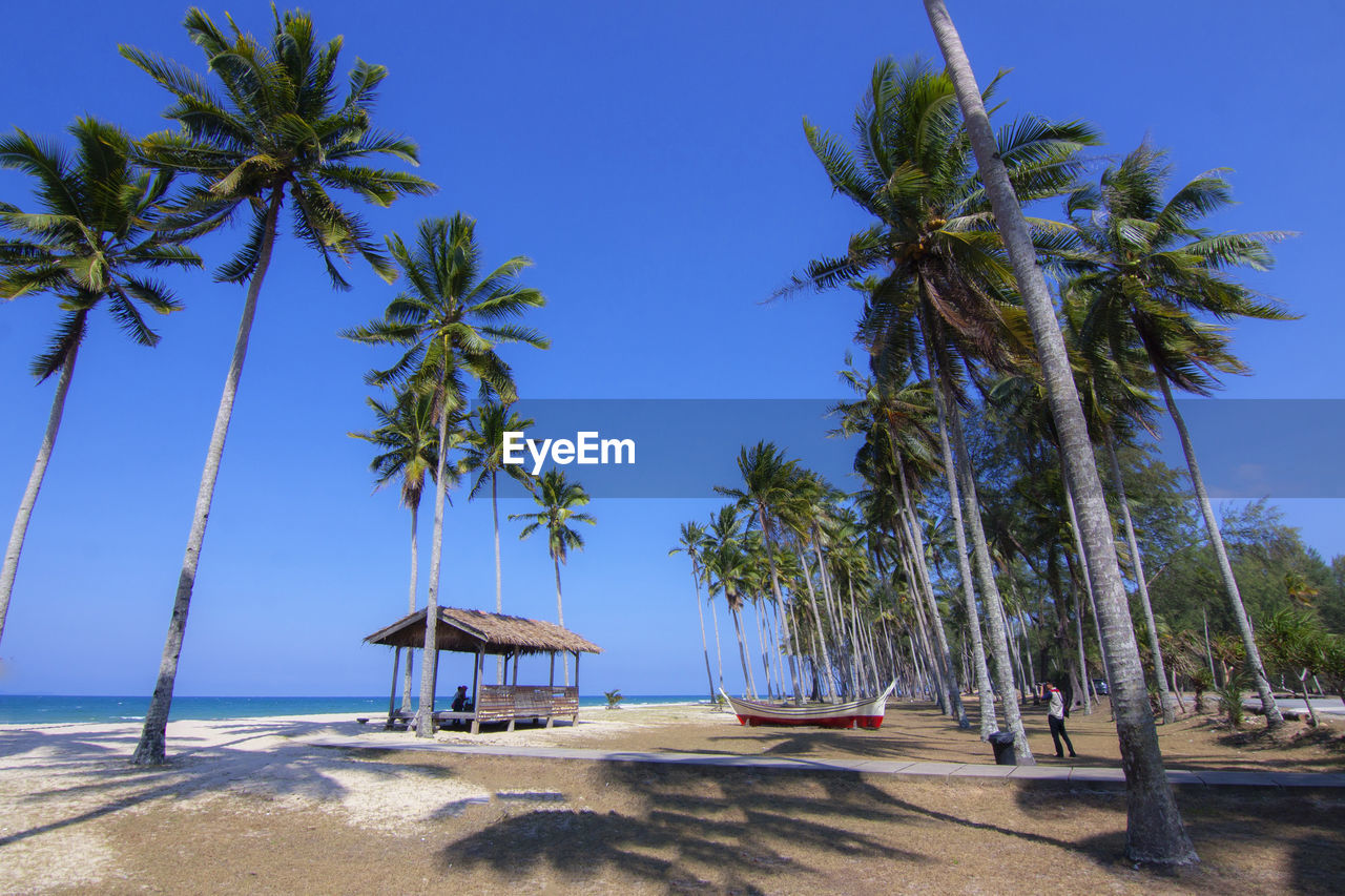 palm tree, tropical climate, tree, sky, plant, land, water, beach, nature, growth, beauty in nature, sea, scenics - nature, clear sky, tree trunk, tranquil scene, blue, sand, sunlight, tall - high, no people, outdoors, coconut palm tree, tropical tree