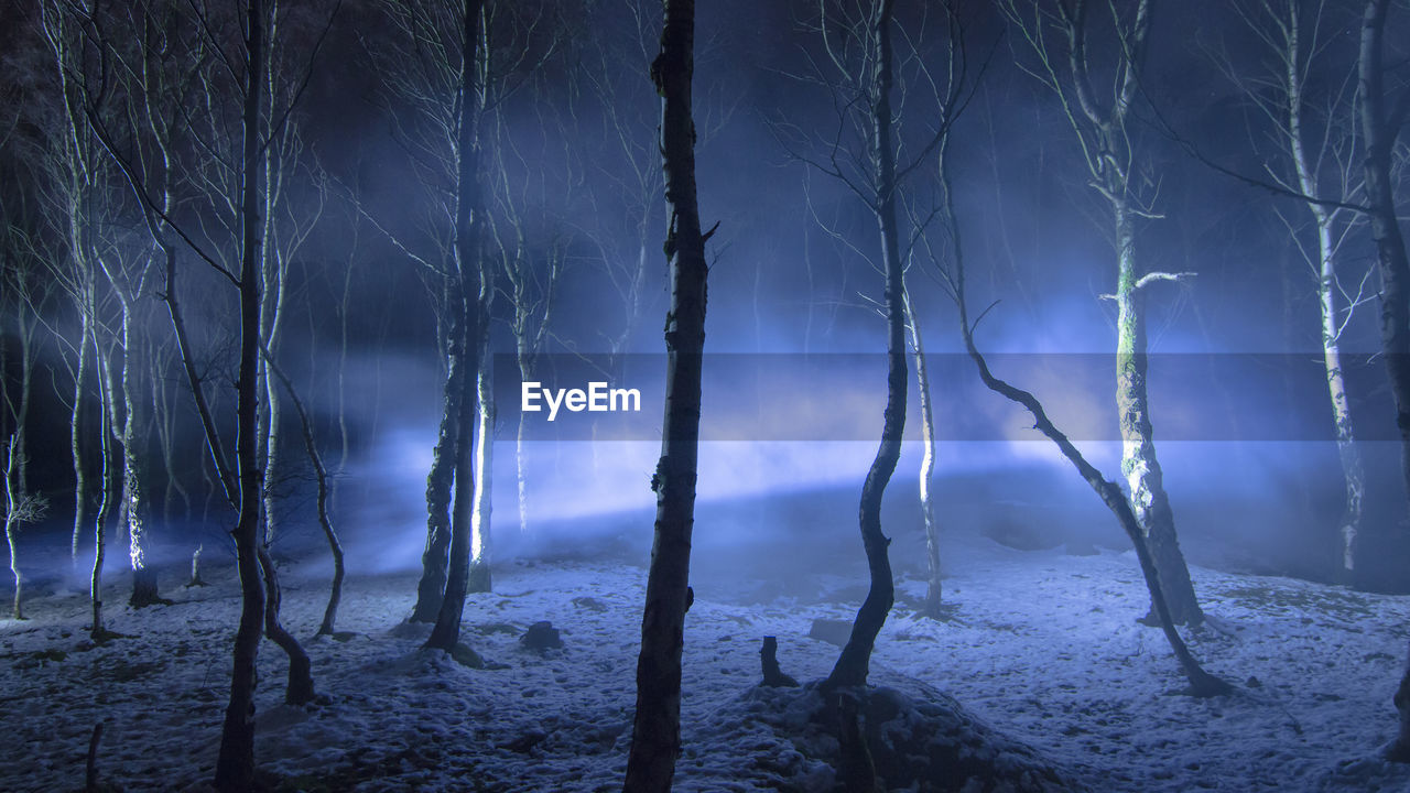 Trees In Forest During Winter At Night