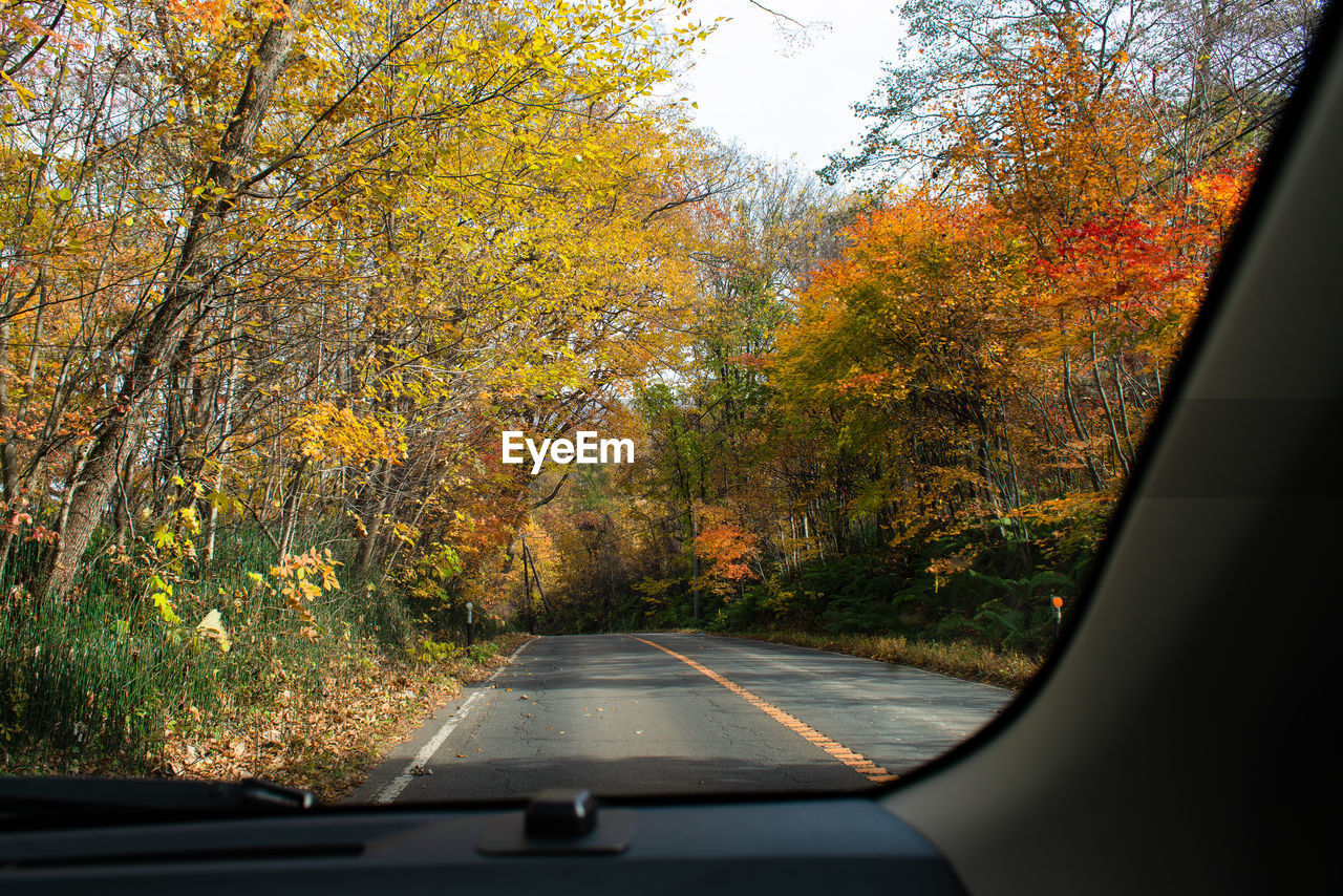 tree, autumn, plant, transportation, change, mode of transportation, car, land vehicle, vehicle interior, motor vehicle, glass - material, day, nature, no people, windshield, beauty in nature, transparent, growth, orange color, road, outdoors
