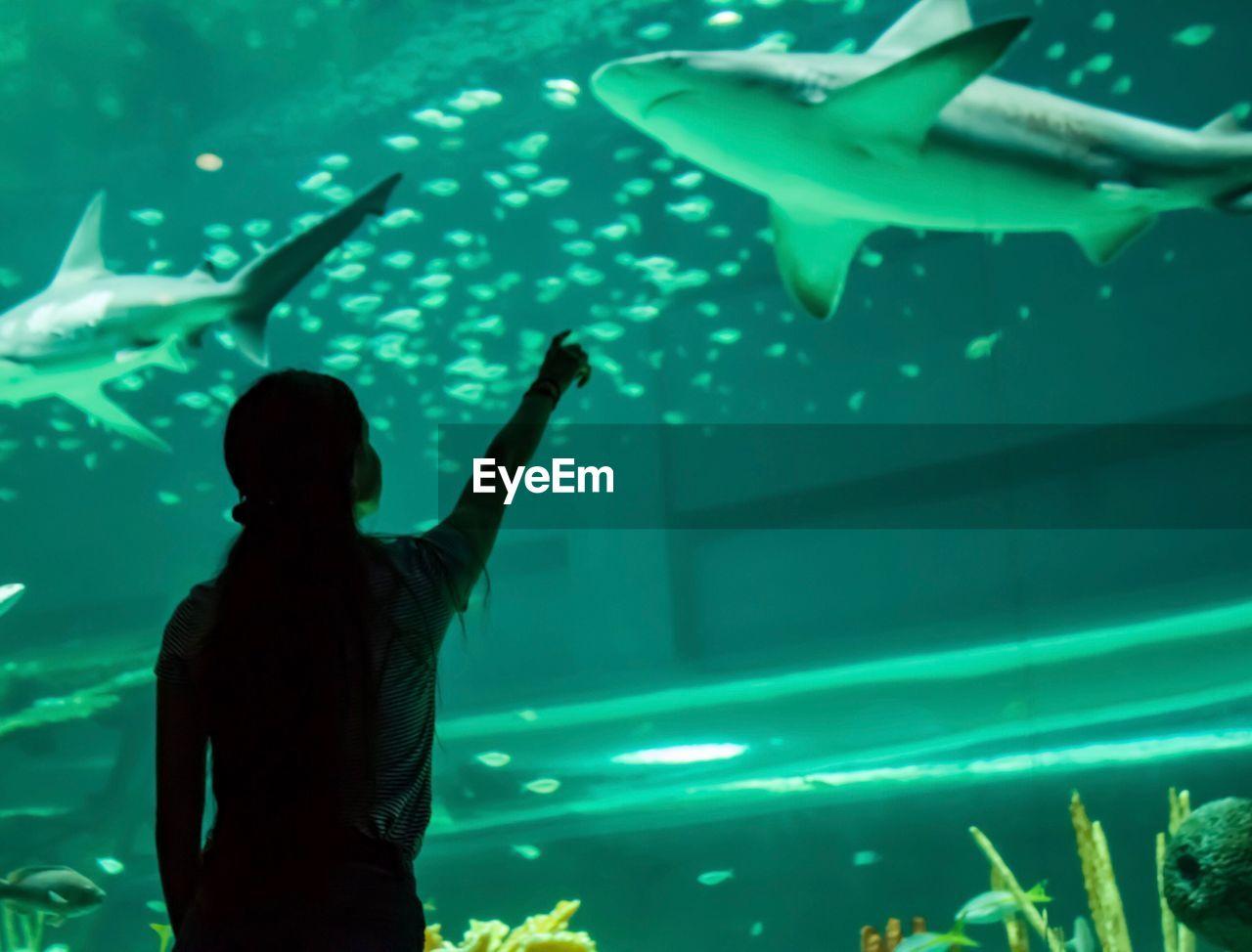 Woman pointing towards shark in aquarium