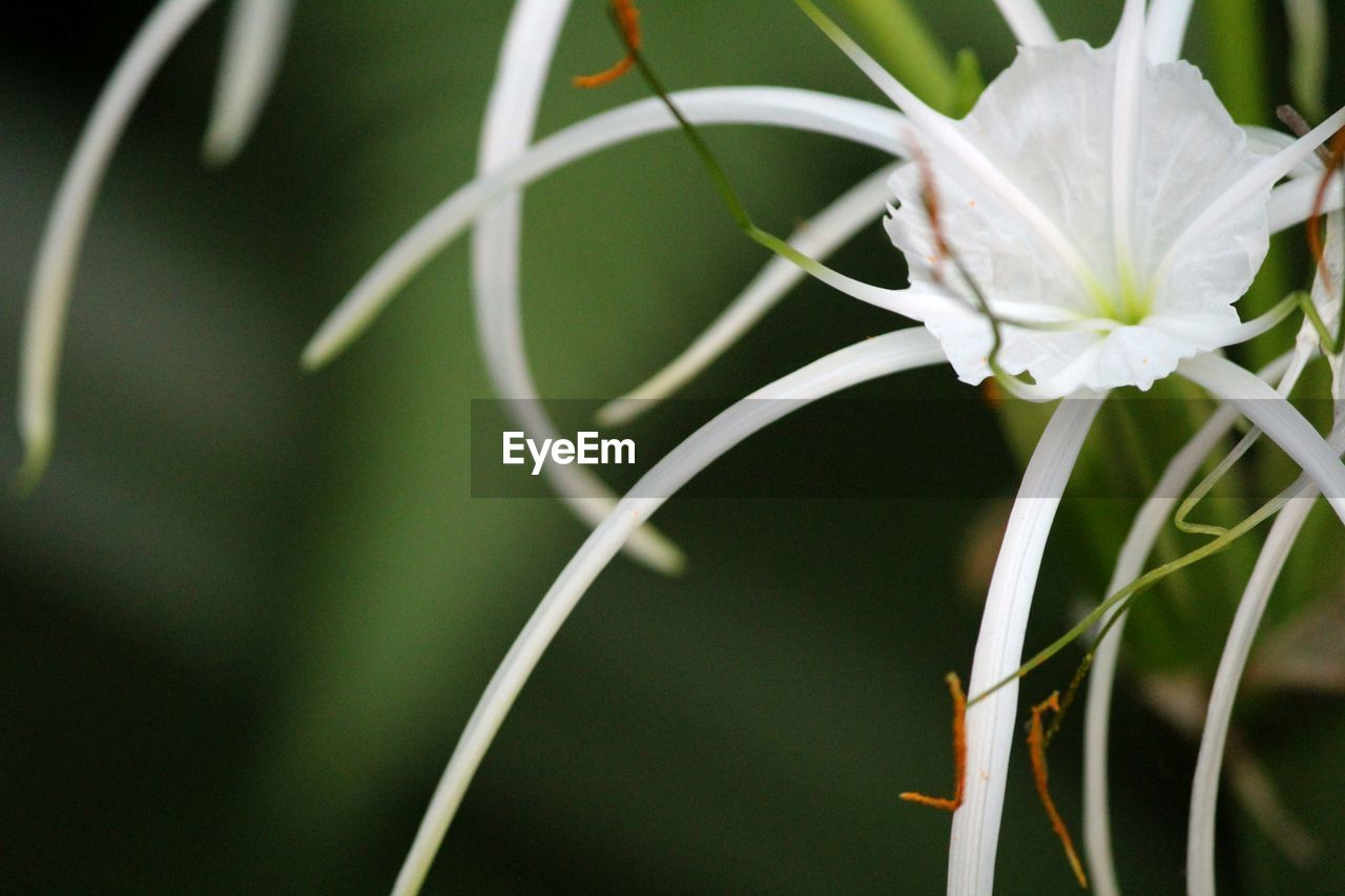 growth, white color, flower, plant, close-up, nature, no people, beauty in nature, petal, fragility, focus on foreground, freshness, day, outdoors, flower head