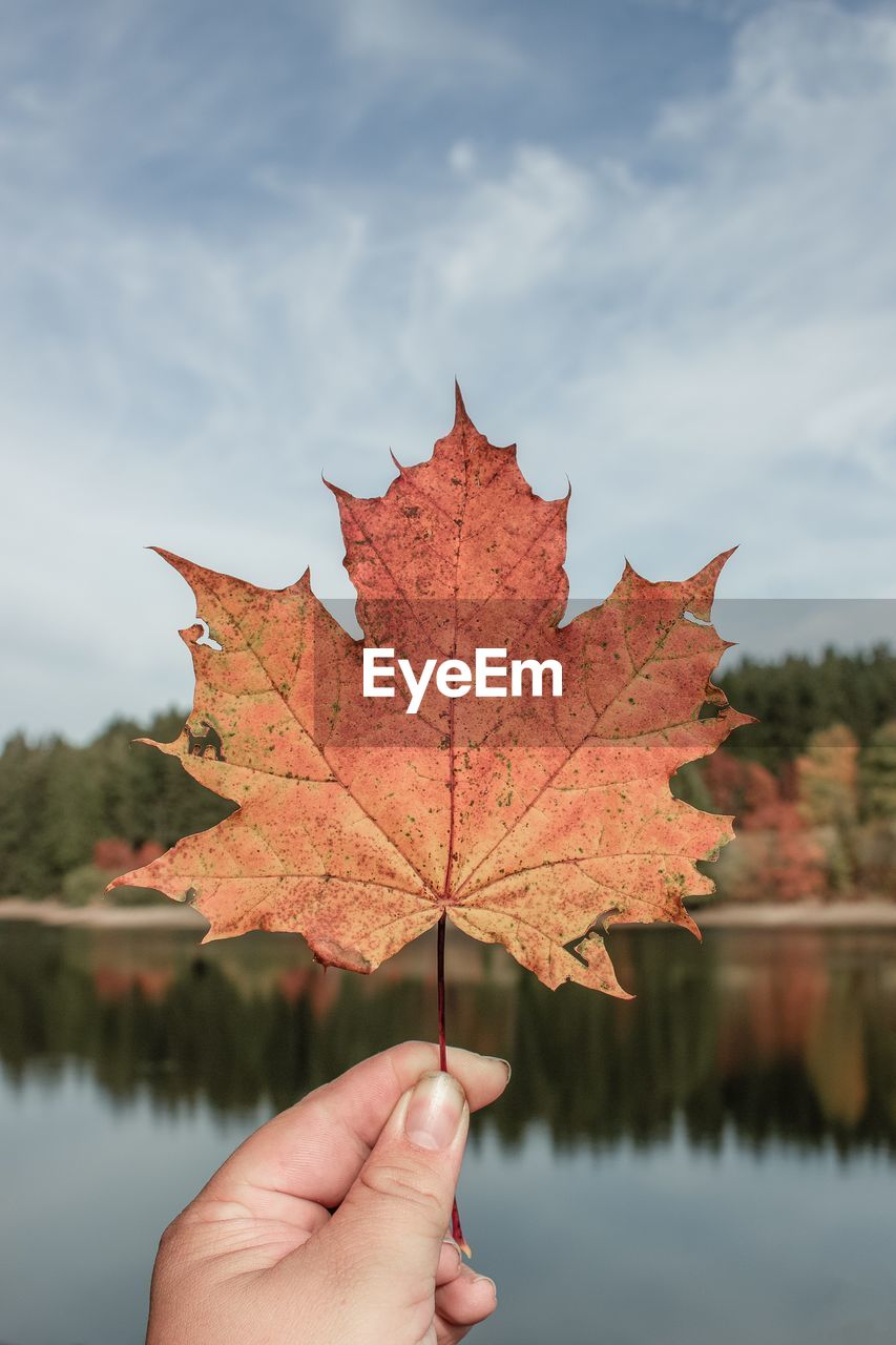 autumn, hand, leaf, one person, human hand, change, plant part, unrecognizable person, maple leaf, holding, nature, real people, human body part, tree, lifestyles, day, focus on foreground, plant, finger, sky, body part, outdoors, natural condition, autumn collection